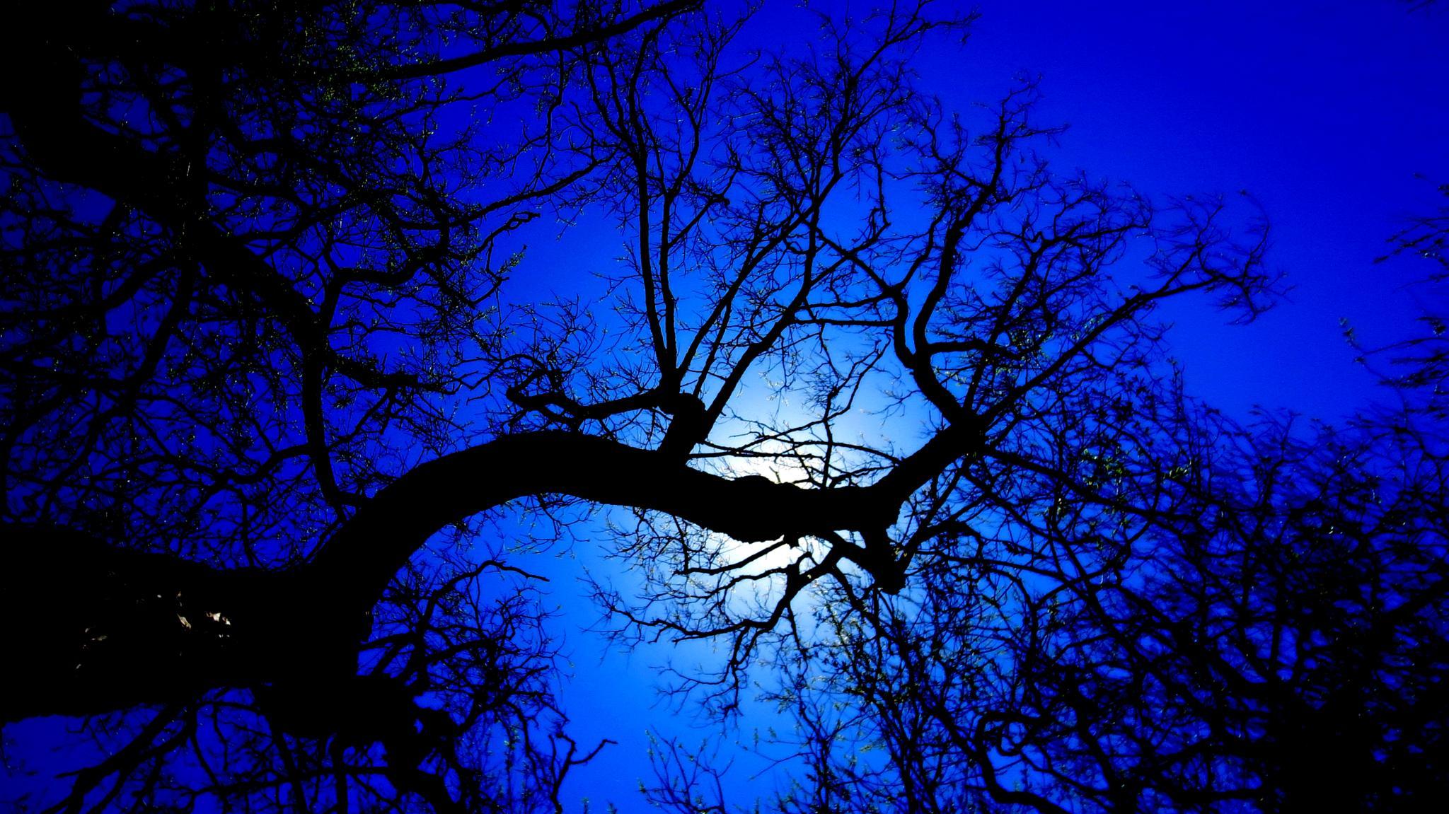TWISTING UPWARDS INTO THE BLUE by Heather Marie Glynn