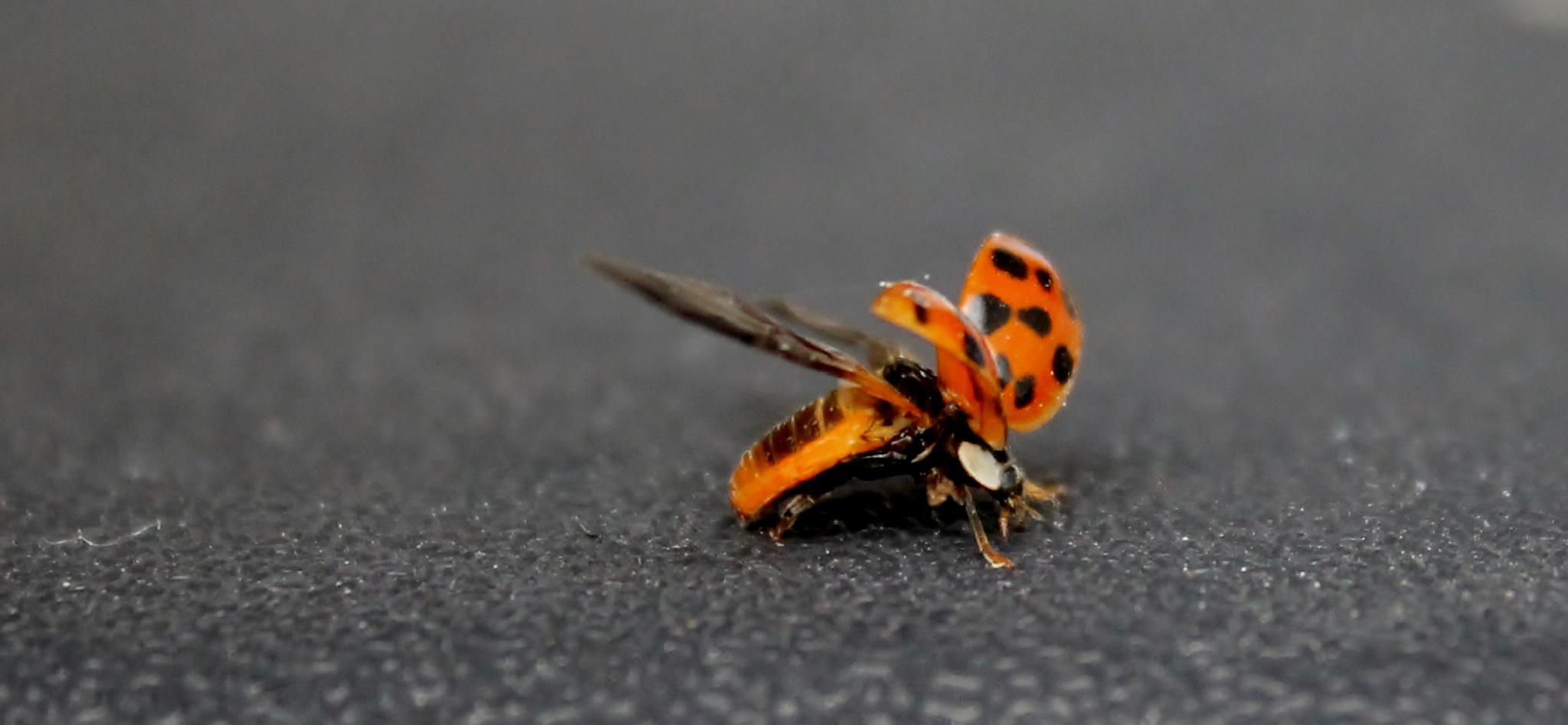 ladybug ladybug by Heather Marie Glynn