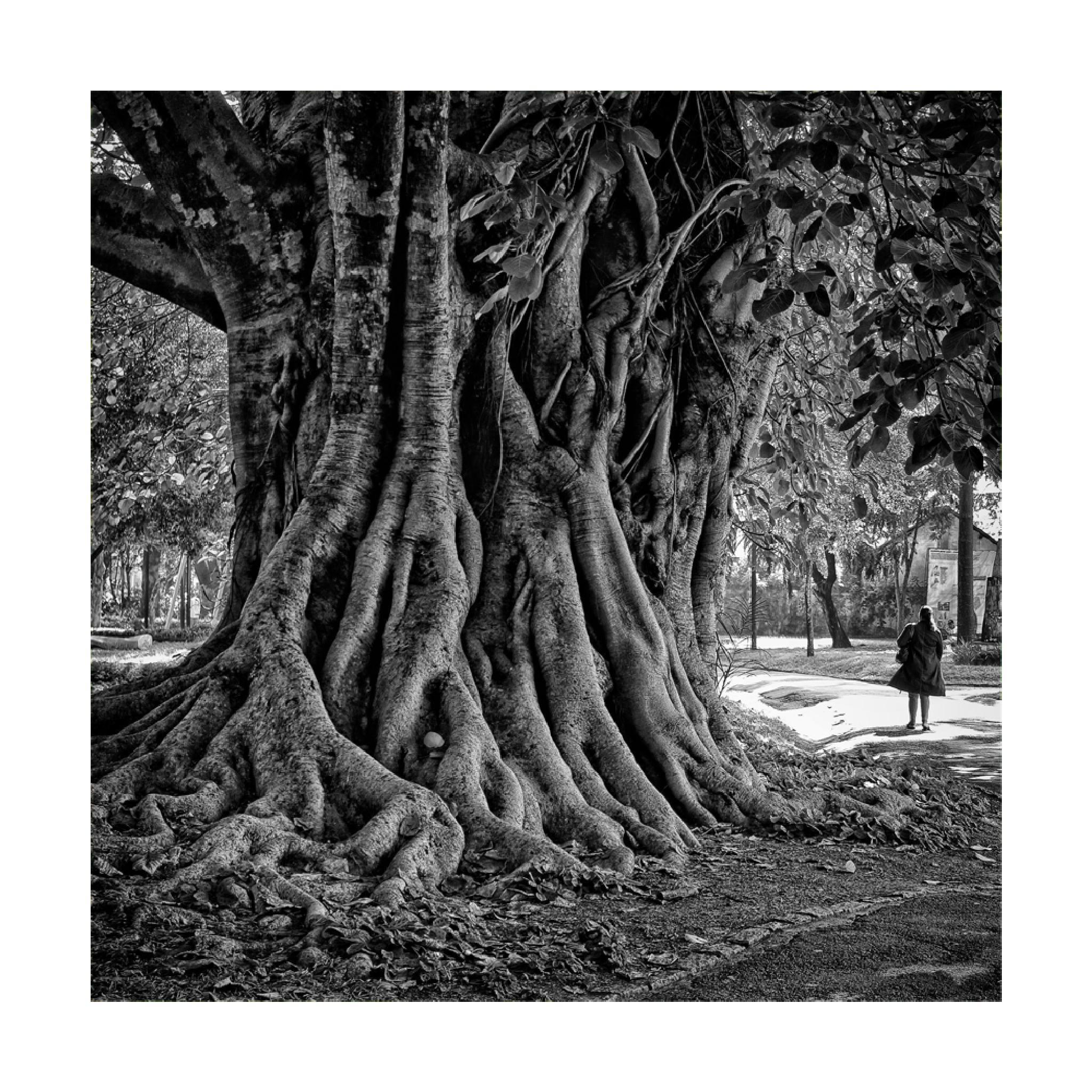 Jardim da Luz by DorivalMoreira