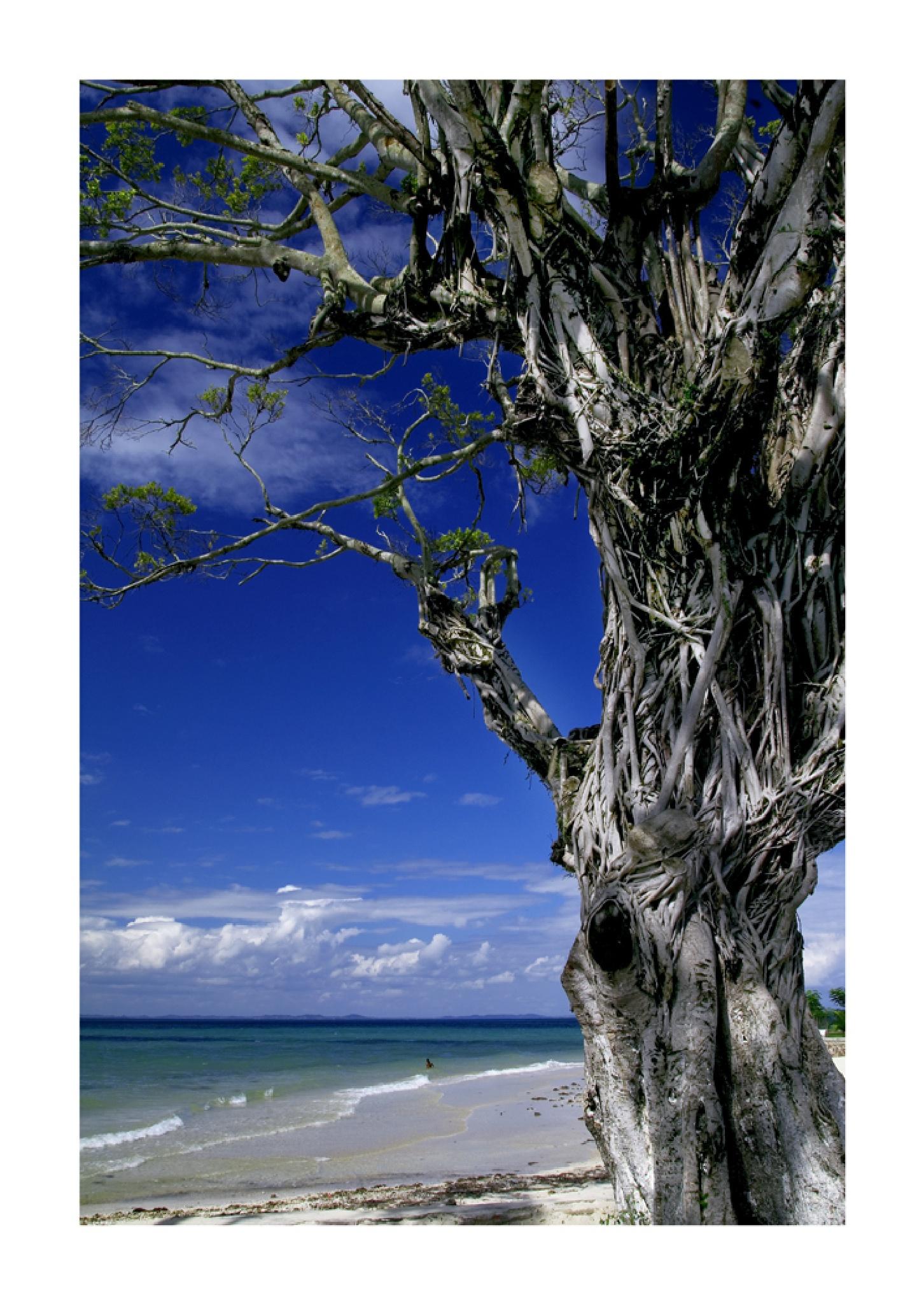 Ilha de Itaparica by DorivalMoreira