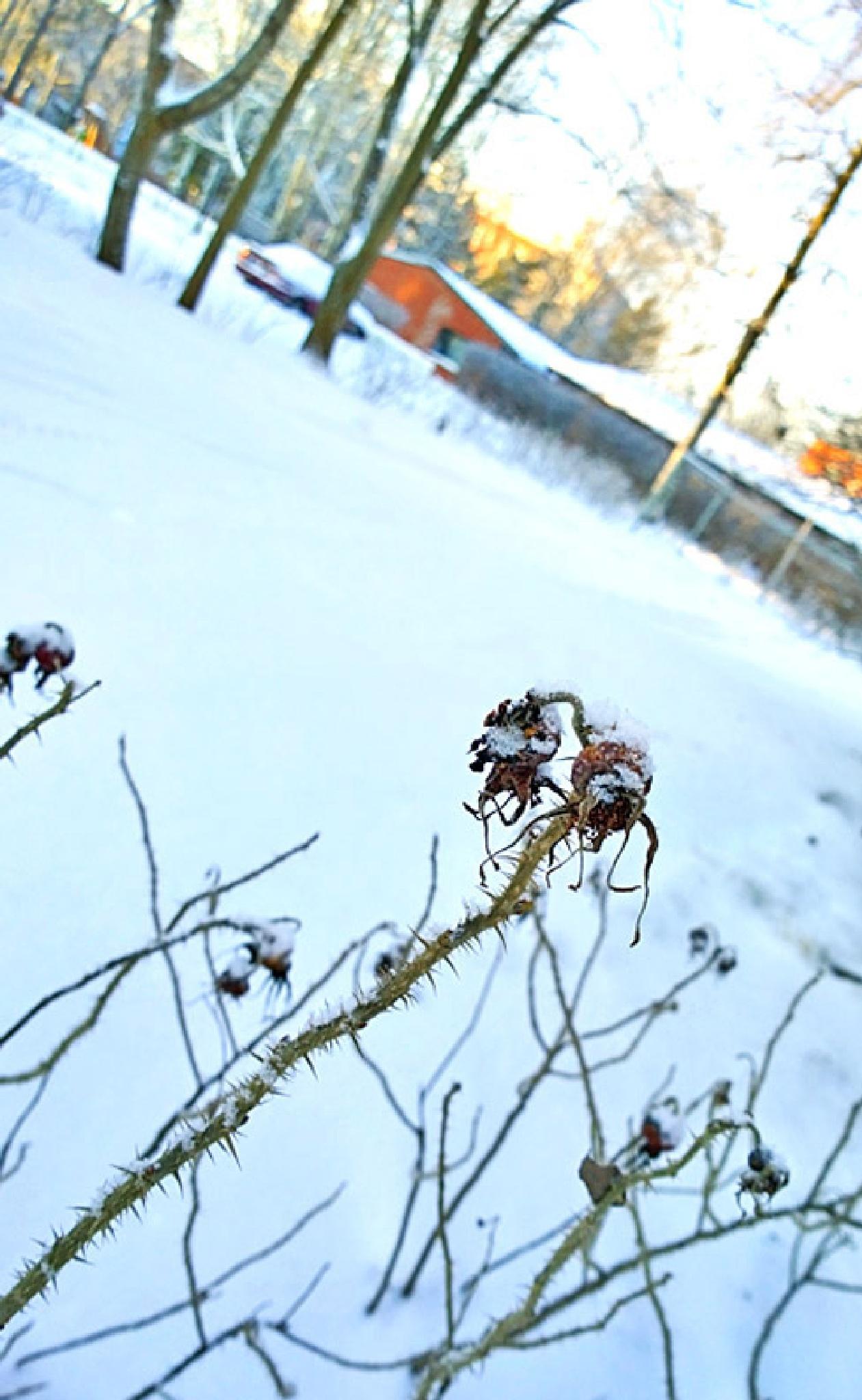 Back Yard by Heljä Kostiainen