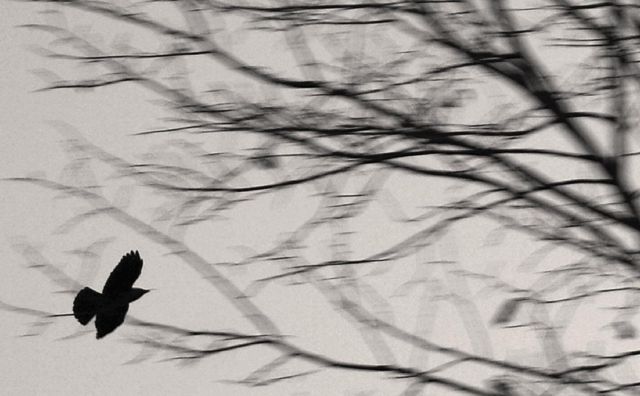 Flying Away by Heljä Kostiainen