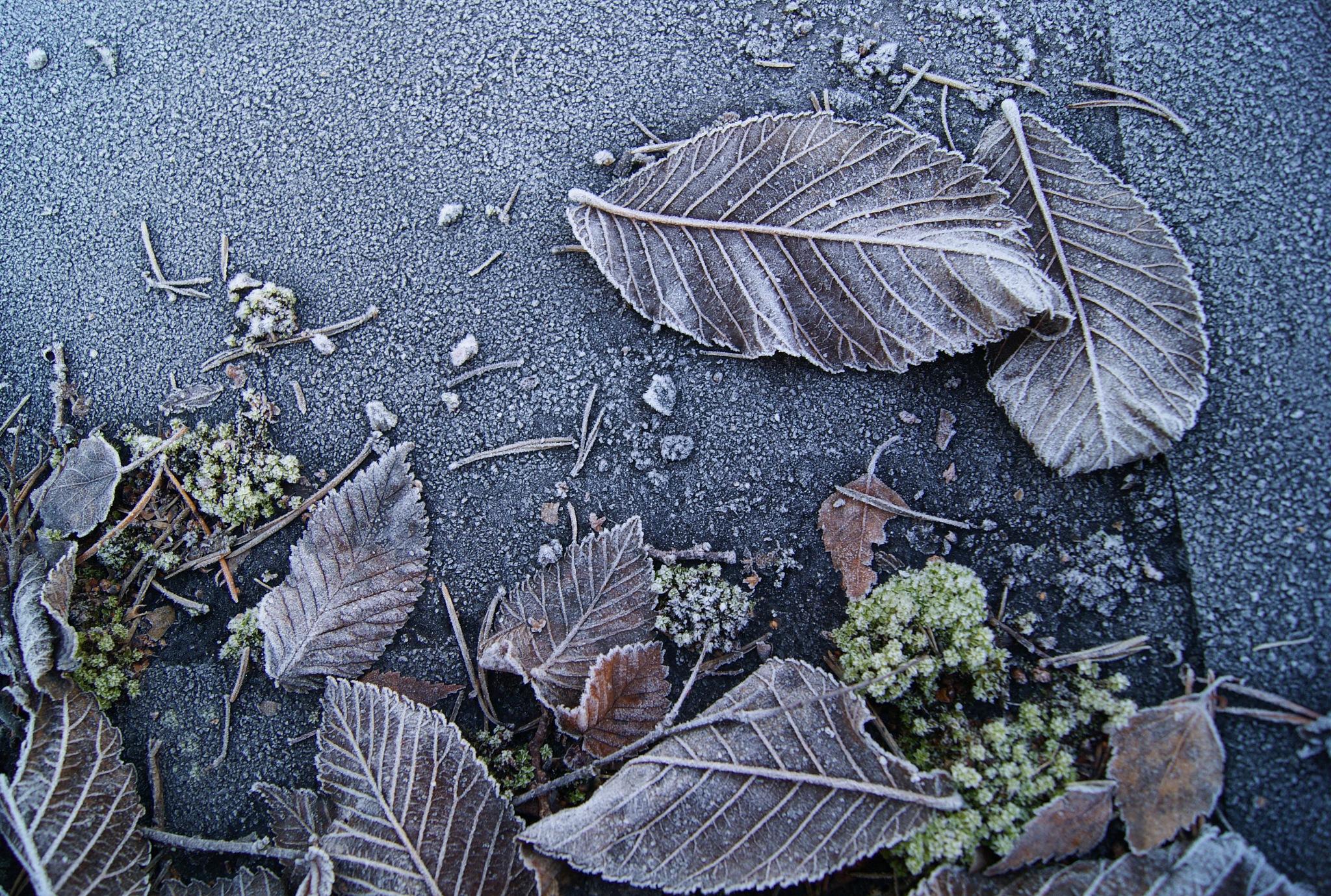 Morning Leaves by Heljä Kostiainen