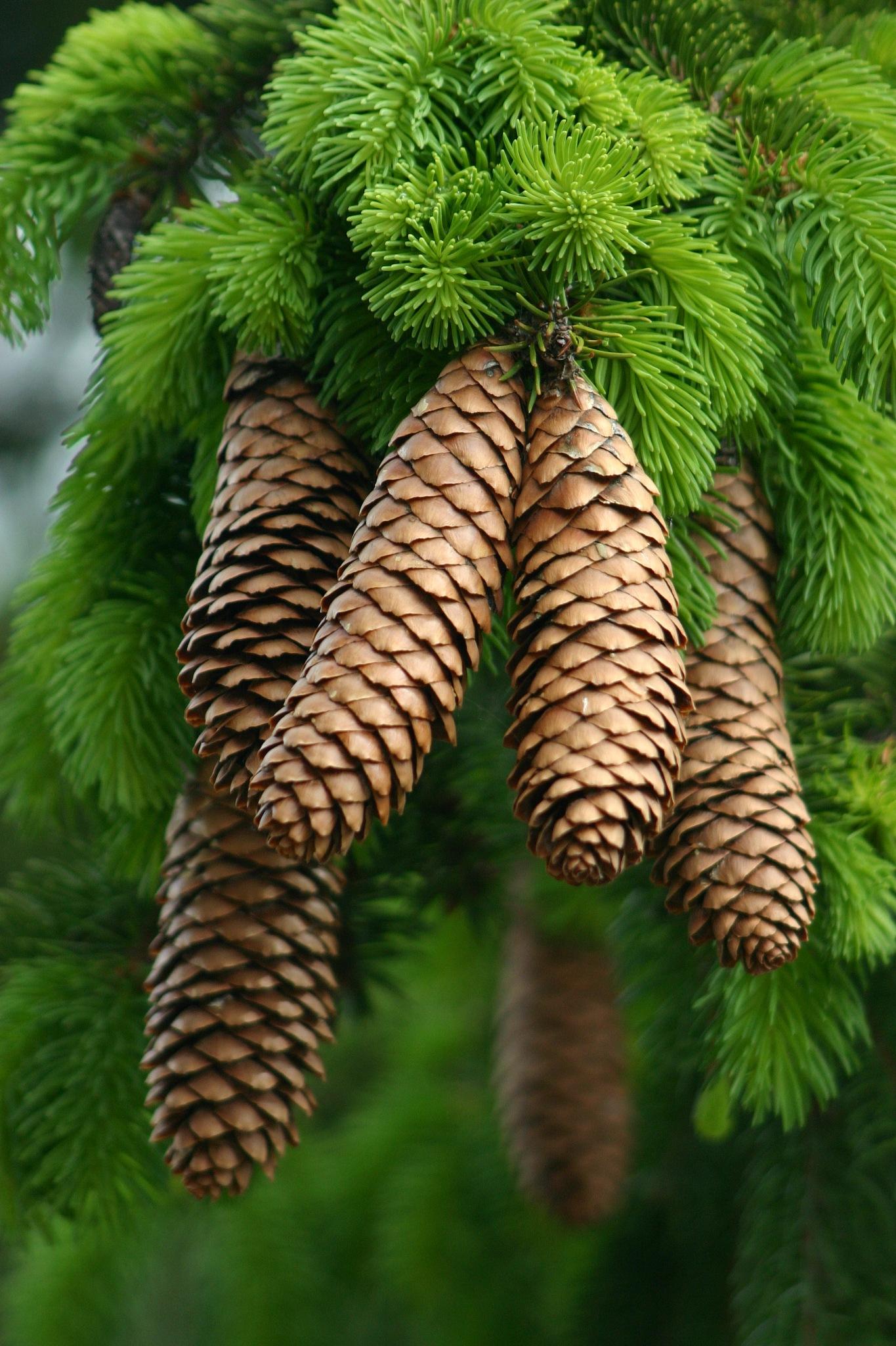 Cones by Bobjb