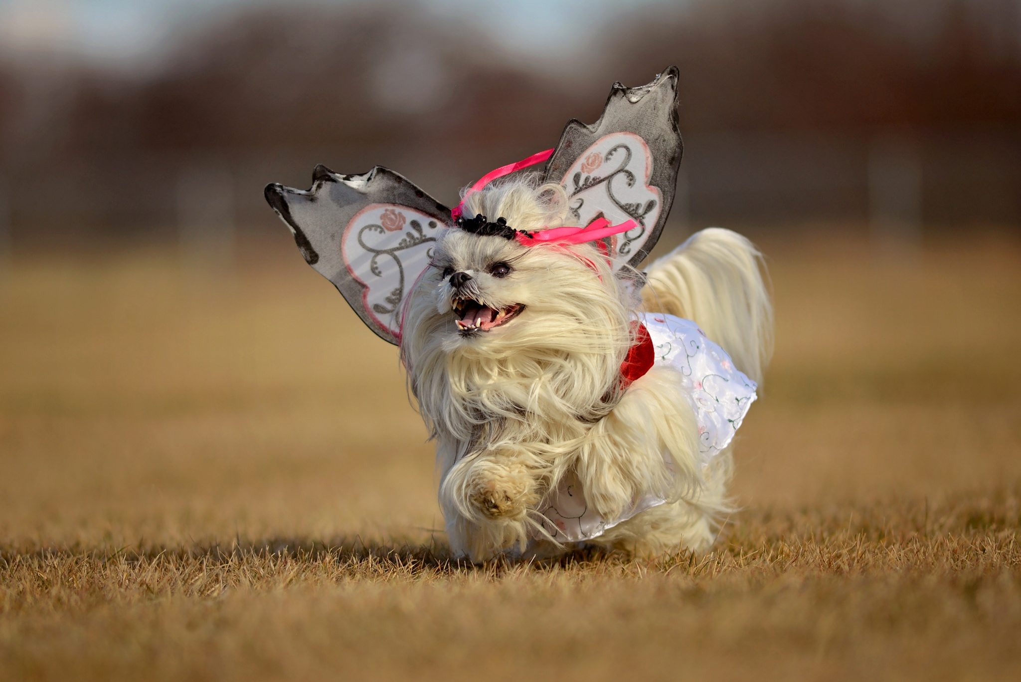 Happy Howl-leen by Sara Hartley
