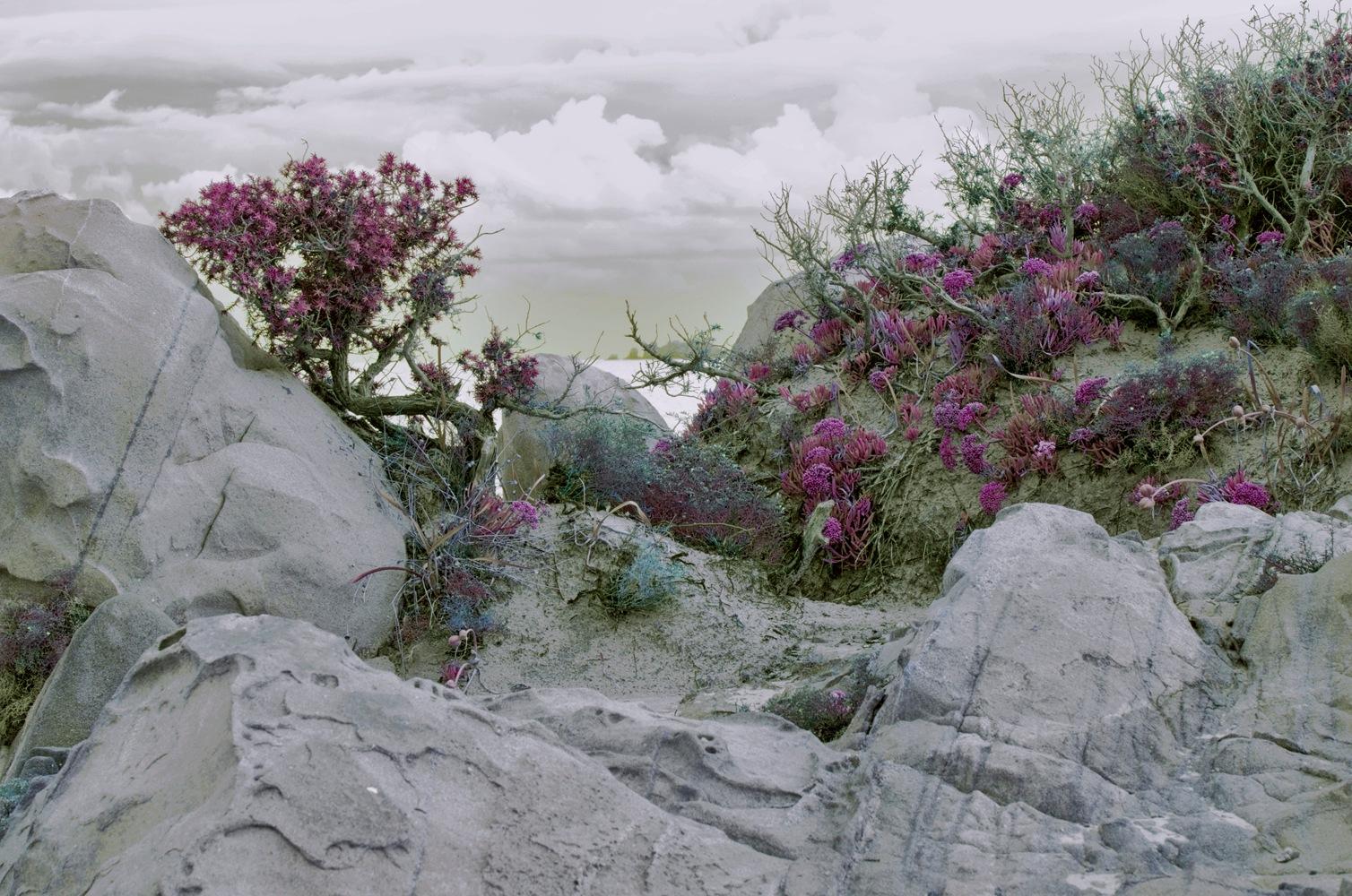 fiorellini by Lauretta Michelutti