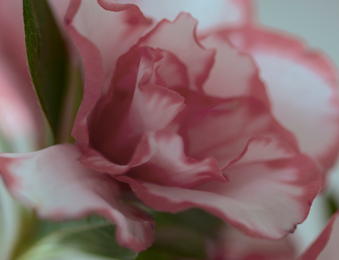 Photo in Nature #fiore