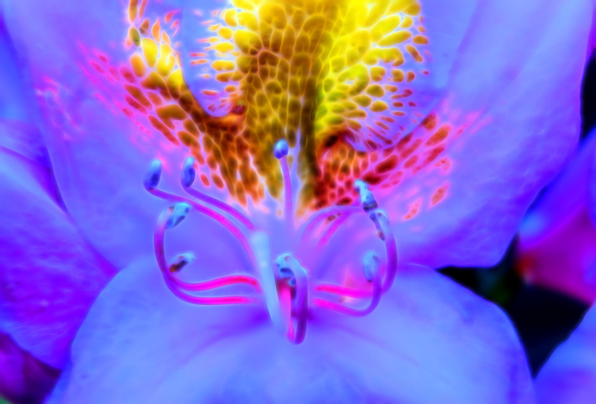 Electric Flower by lbartman55