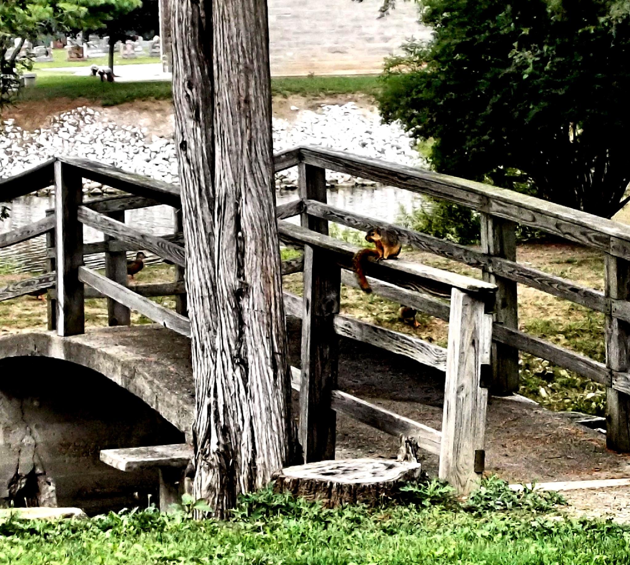Bridge with squirrel by Tammy Warner Hood