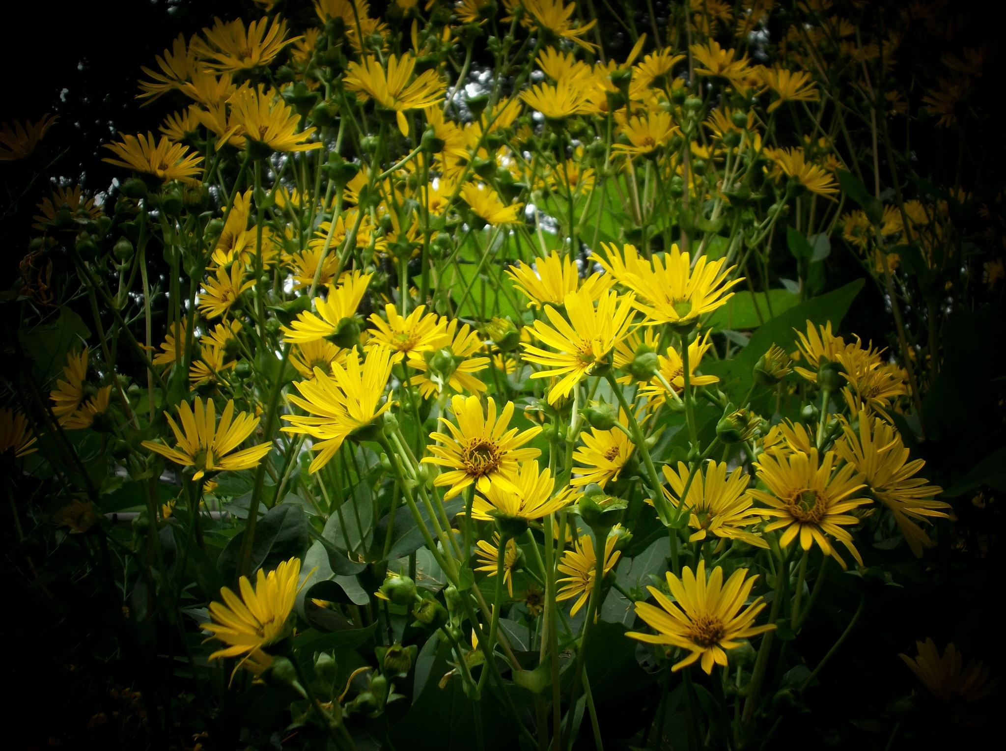 Yellow flowers by Tammy Warner Hood