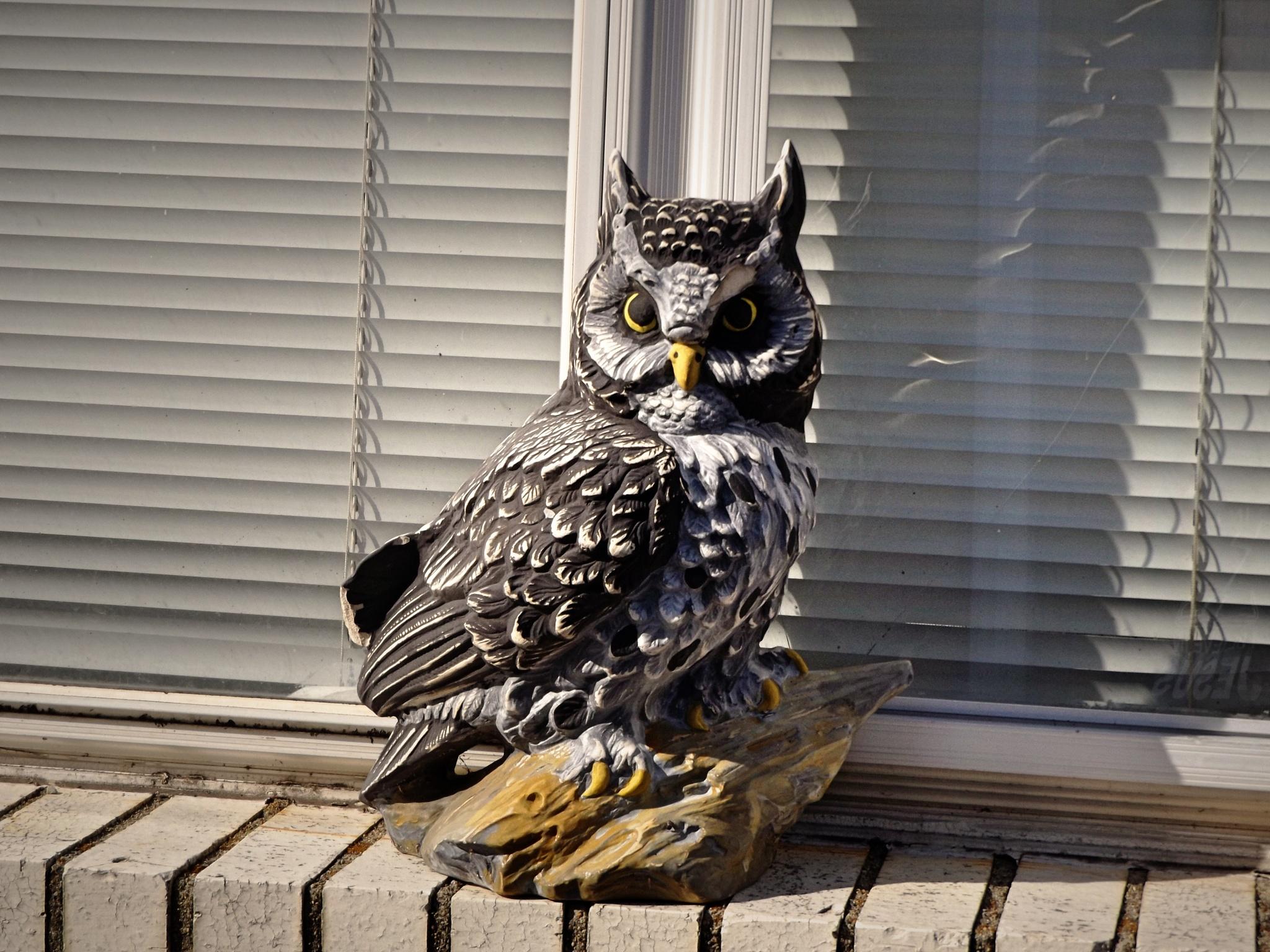 The plastic owl by Tammy Warner Hood