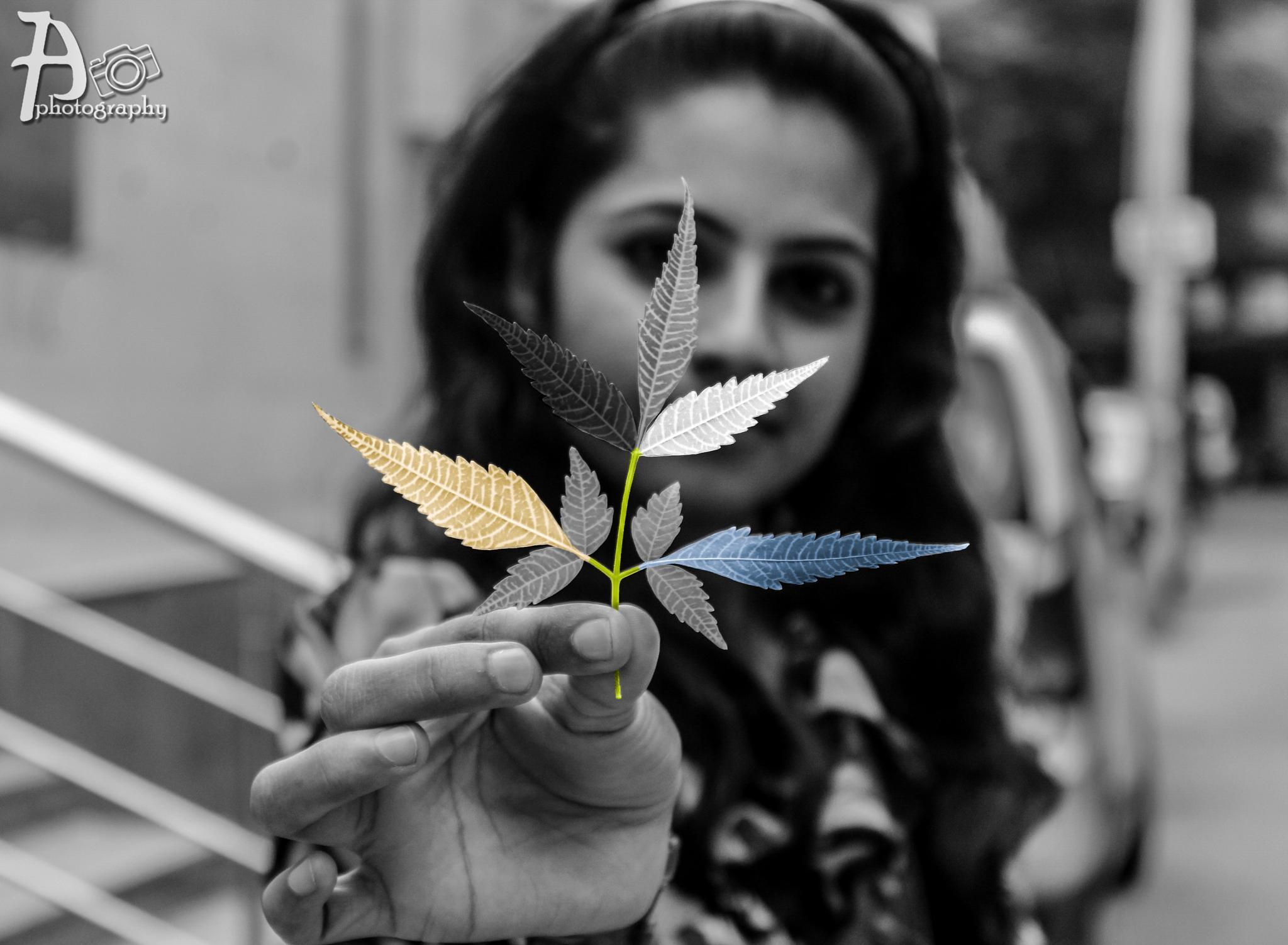 colour by Anubhav Jamuar