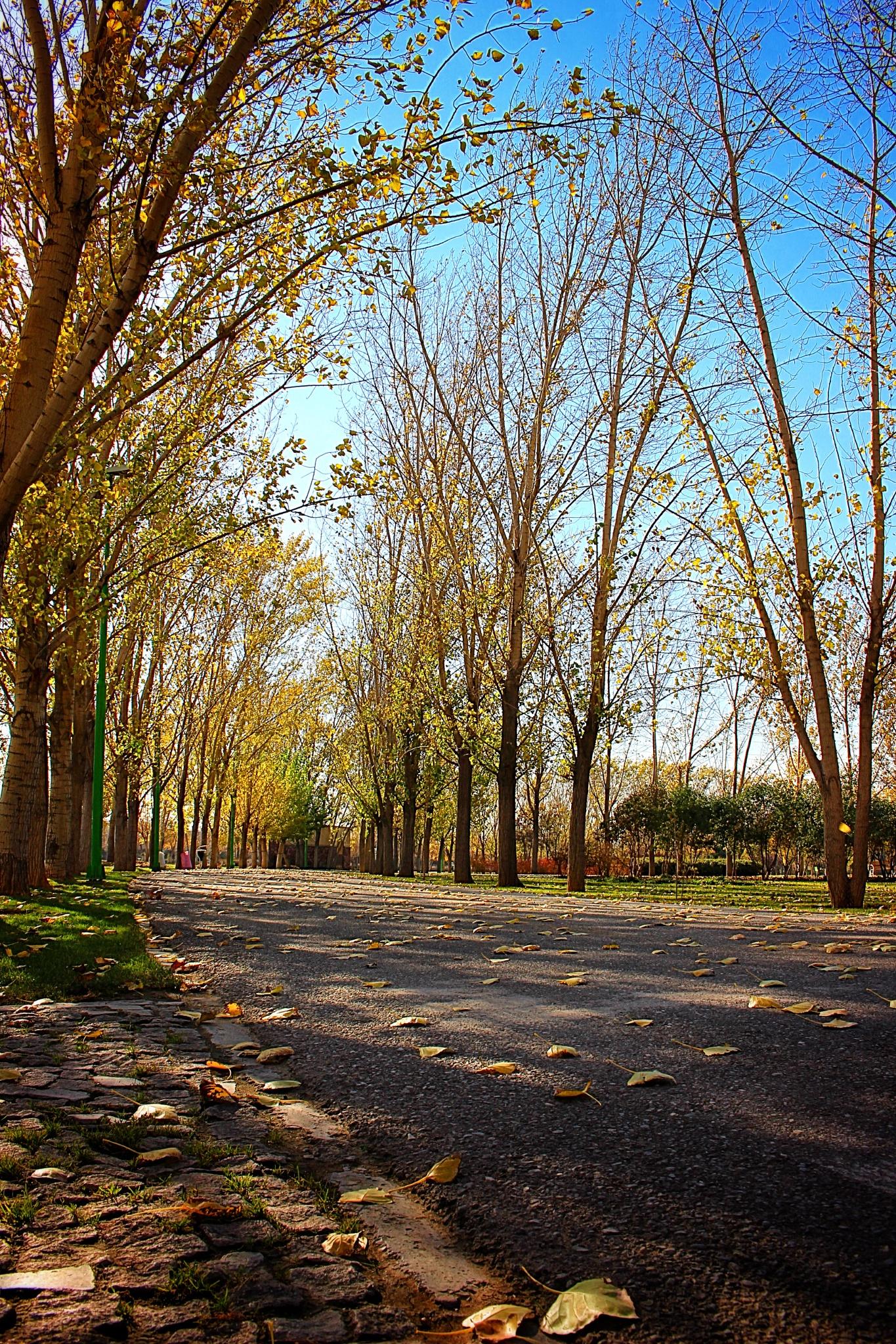 AZADEGAN_Park   by Ahmad Anvari