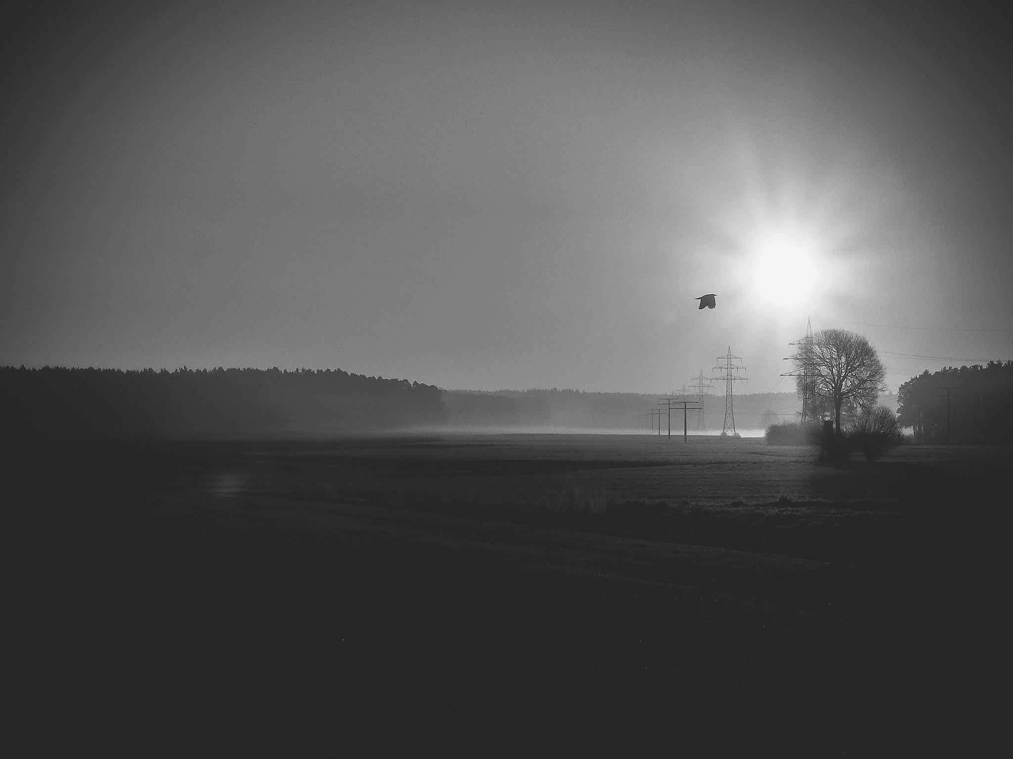 Morning by Michael Geller