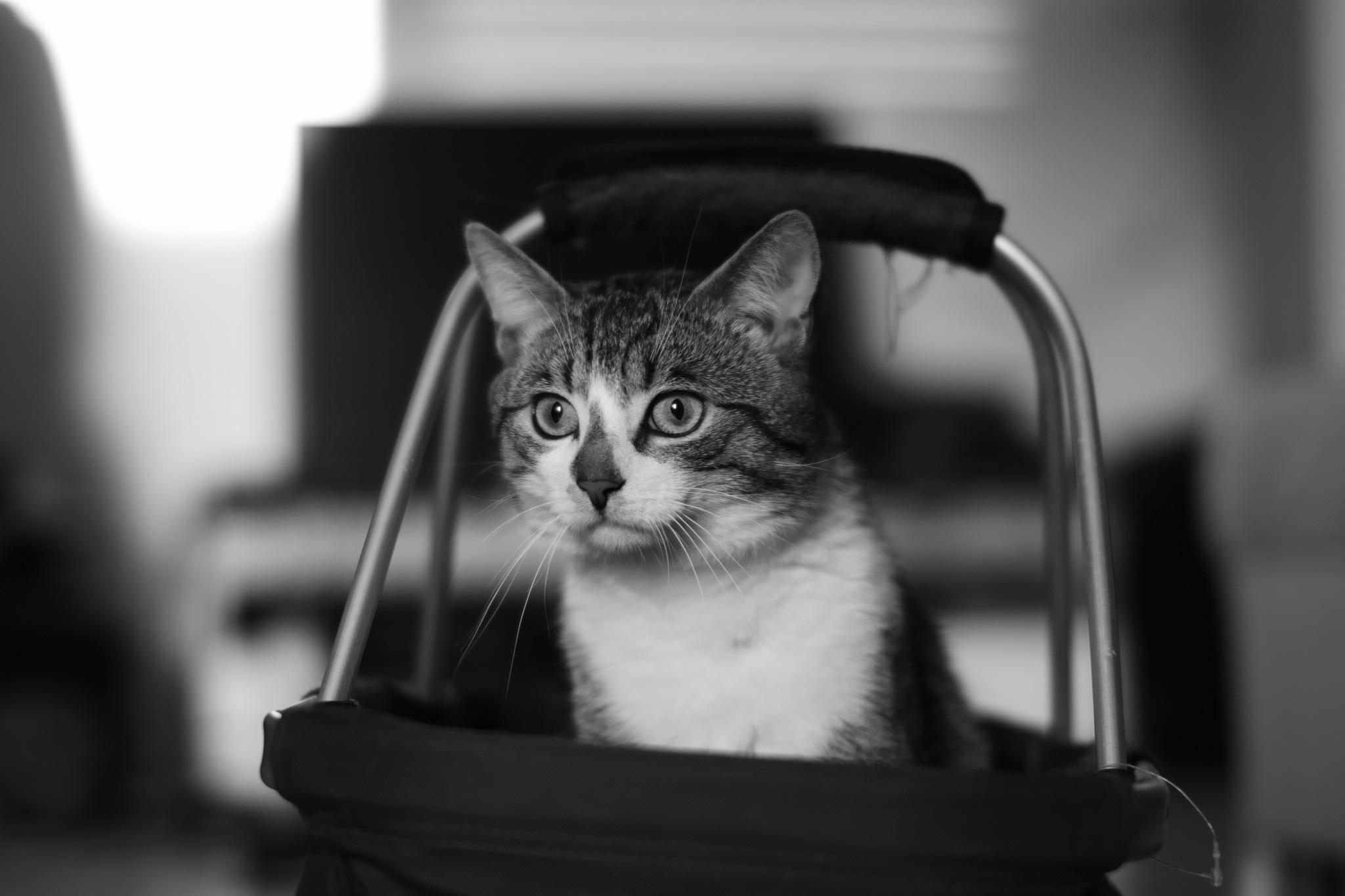 Cat to go by Michael Geller