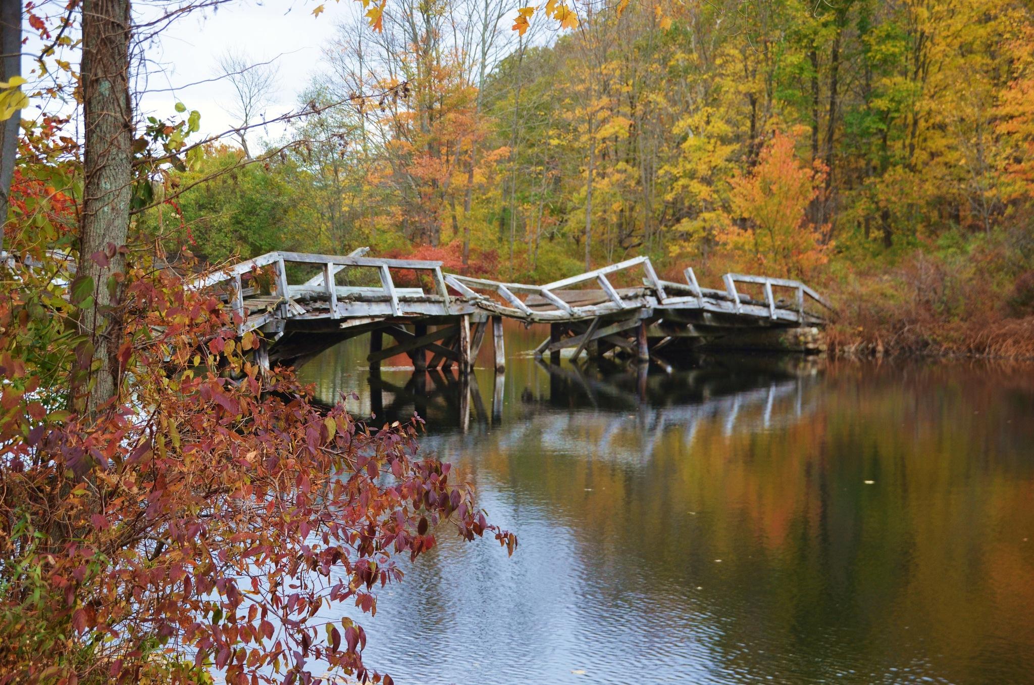 Fall colors by Joseph A Feola