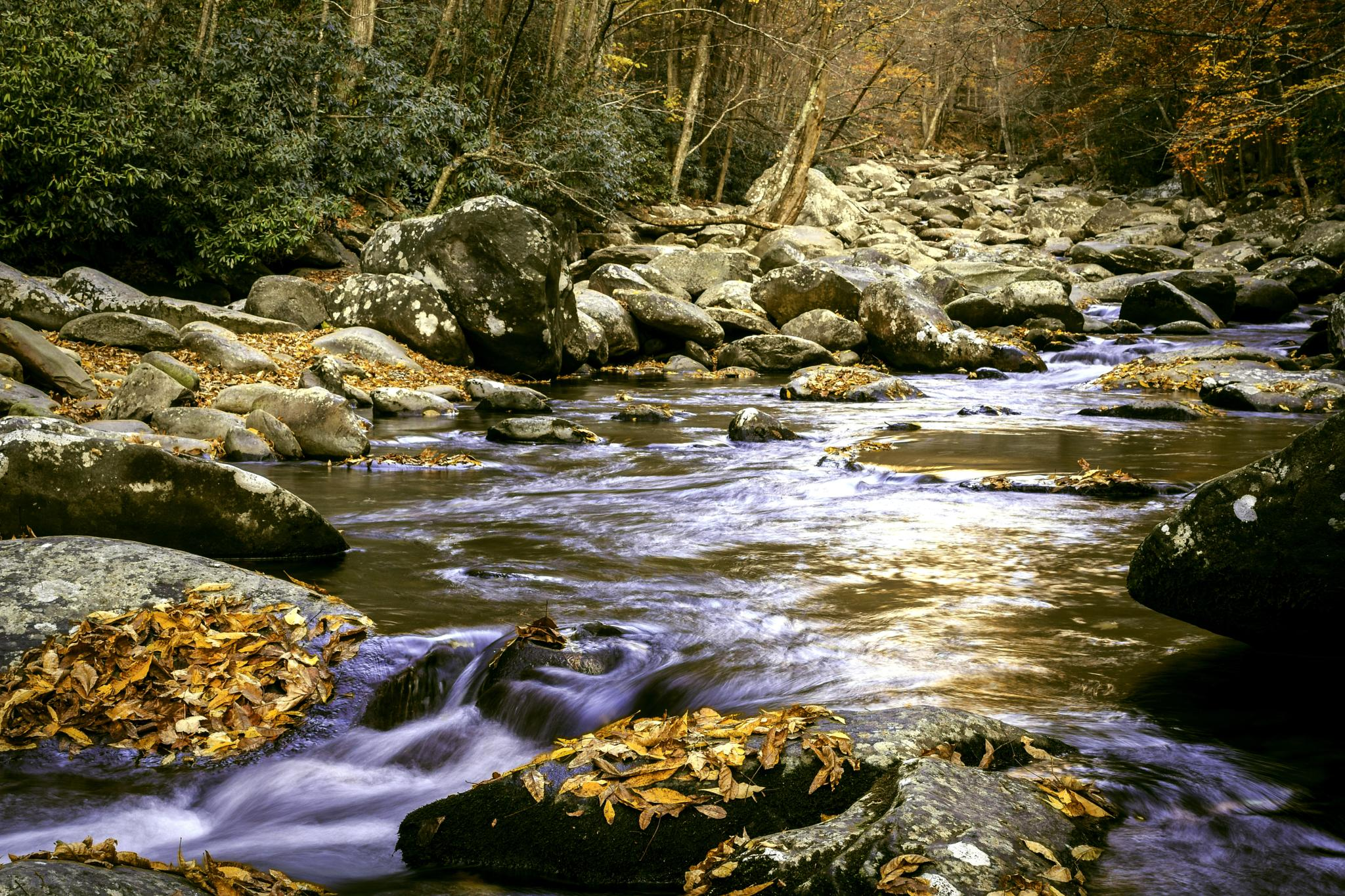 River In Fall by j. Michael Hill