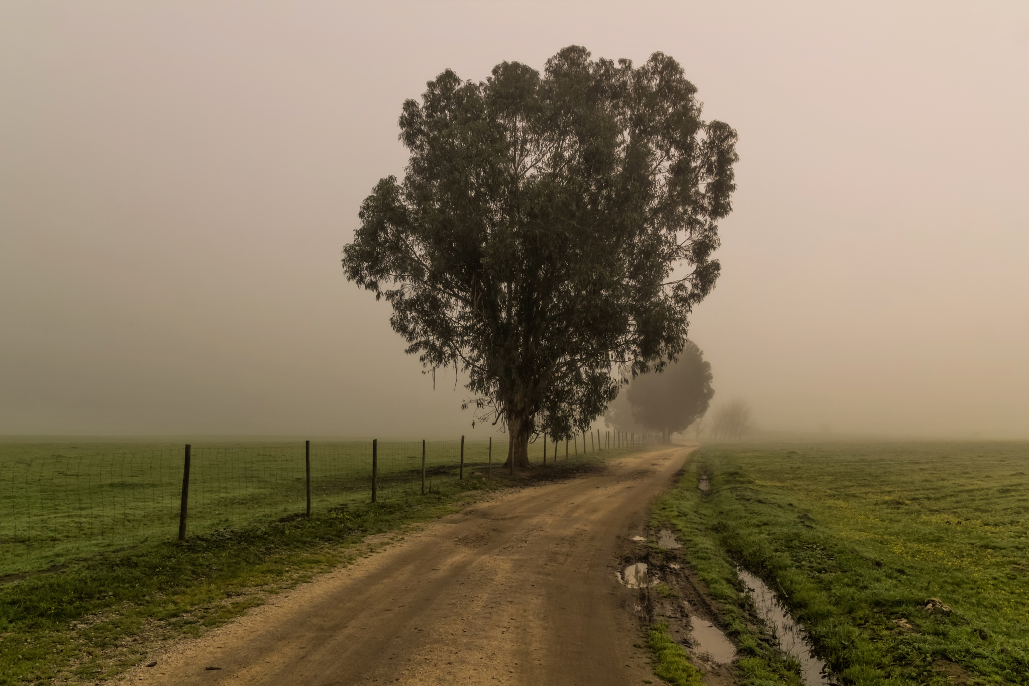 misty path by manimage
