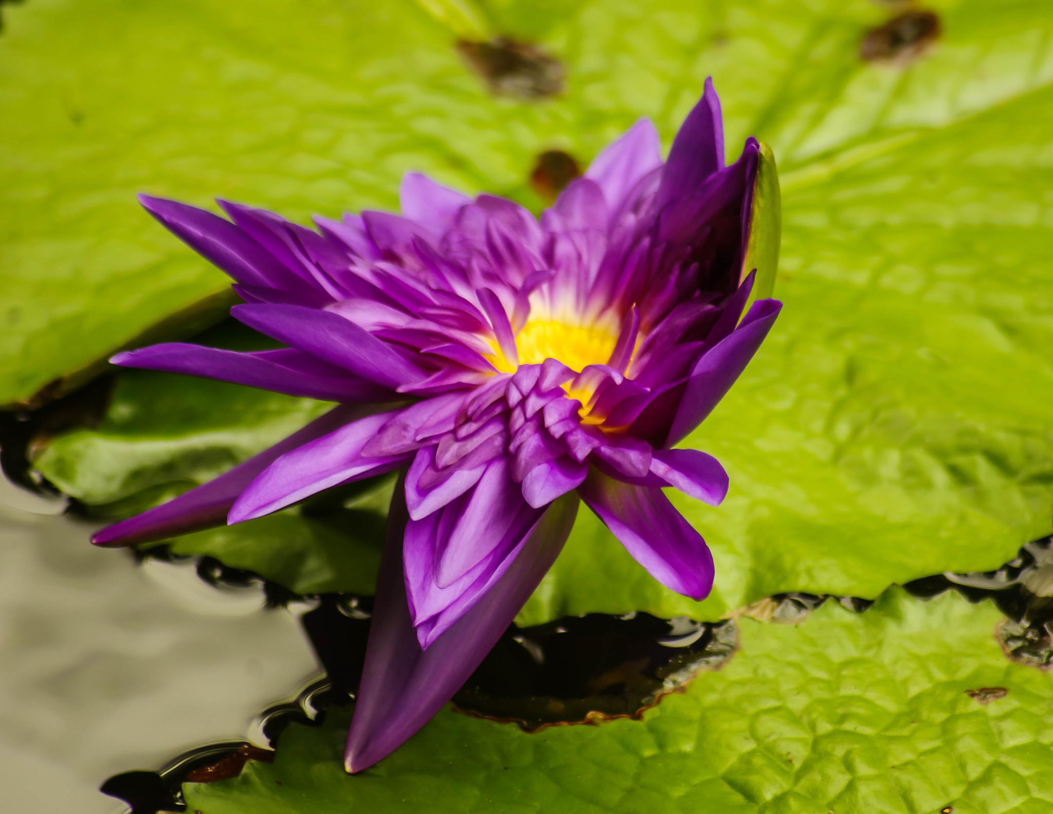 Purple Euphoria by lesliermccree