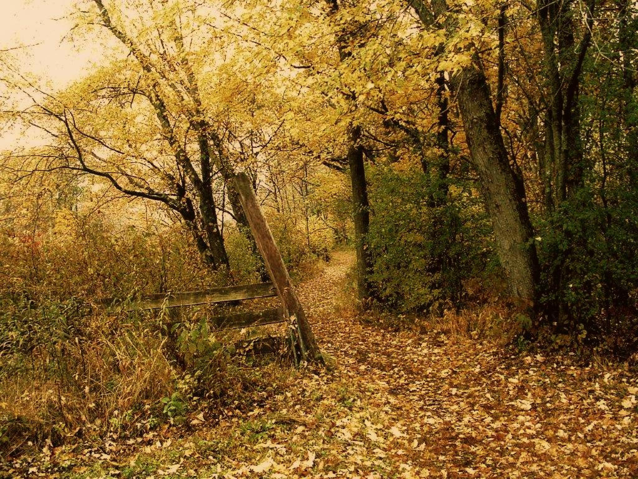 Autumn Path by SwmpGrl