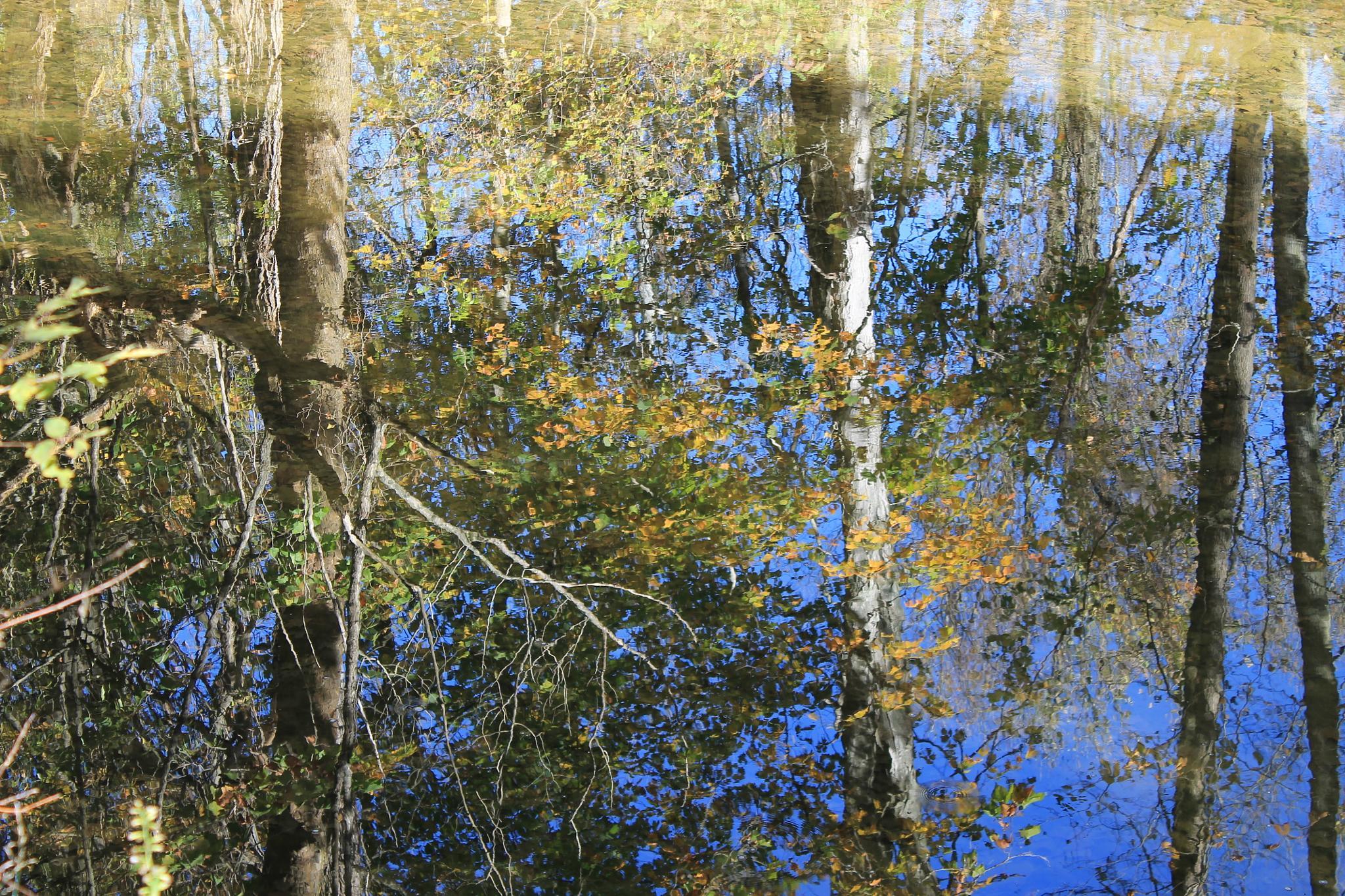 Reflections on Oatka by George Sander