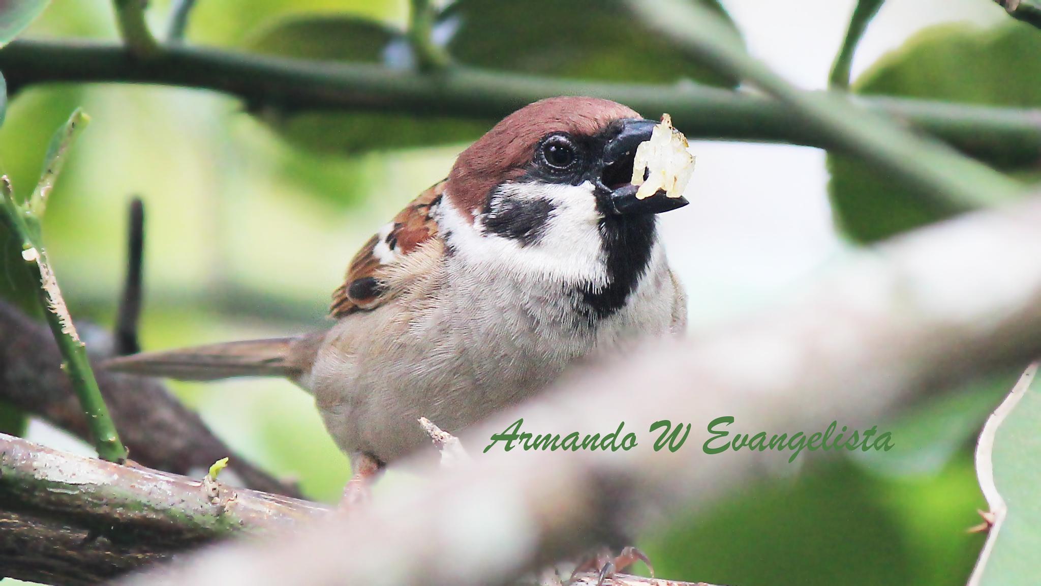 Mama Bird by Armando William Sadang Evangelista