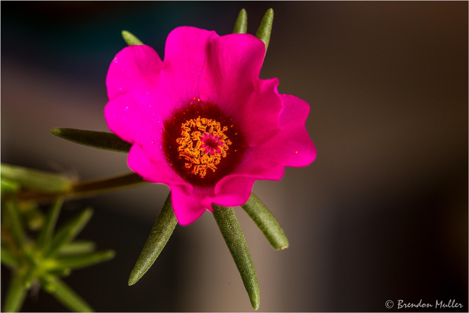 Wild Flower by Brendon Muller
