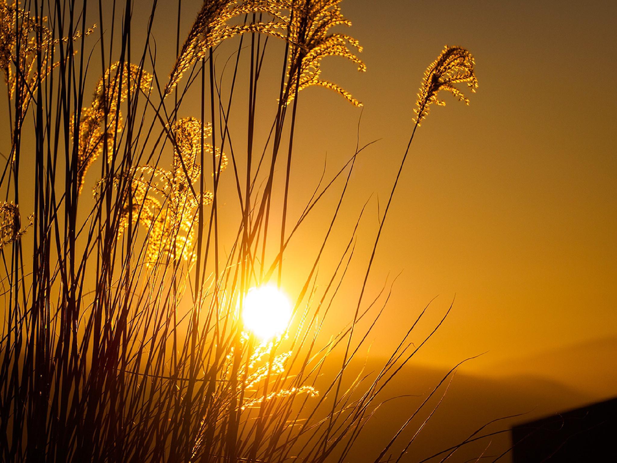 Good morning! by Ganesh Neumair
