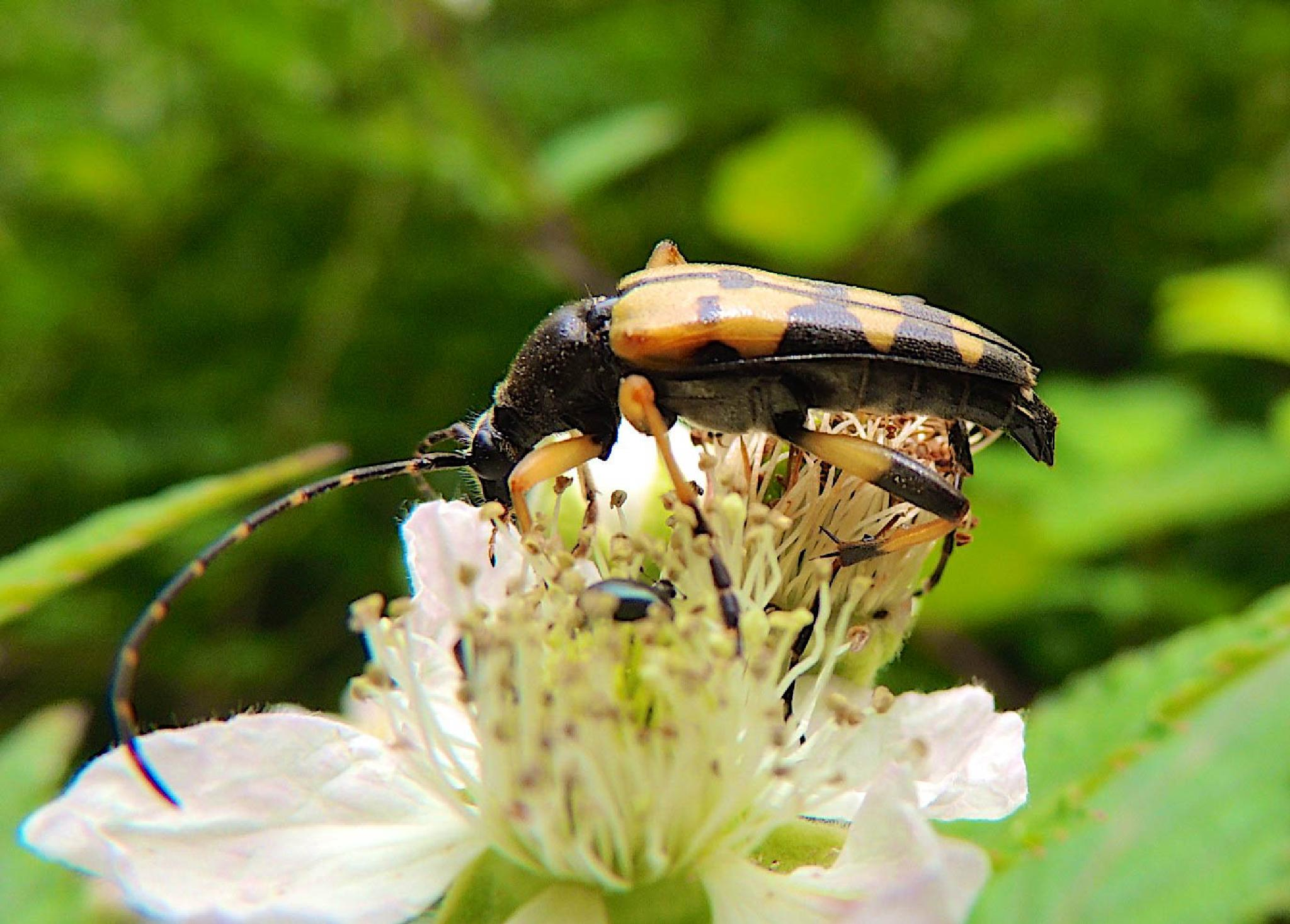Bug by Oliver Kieser