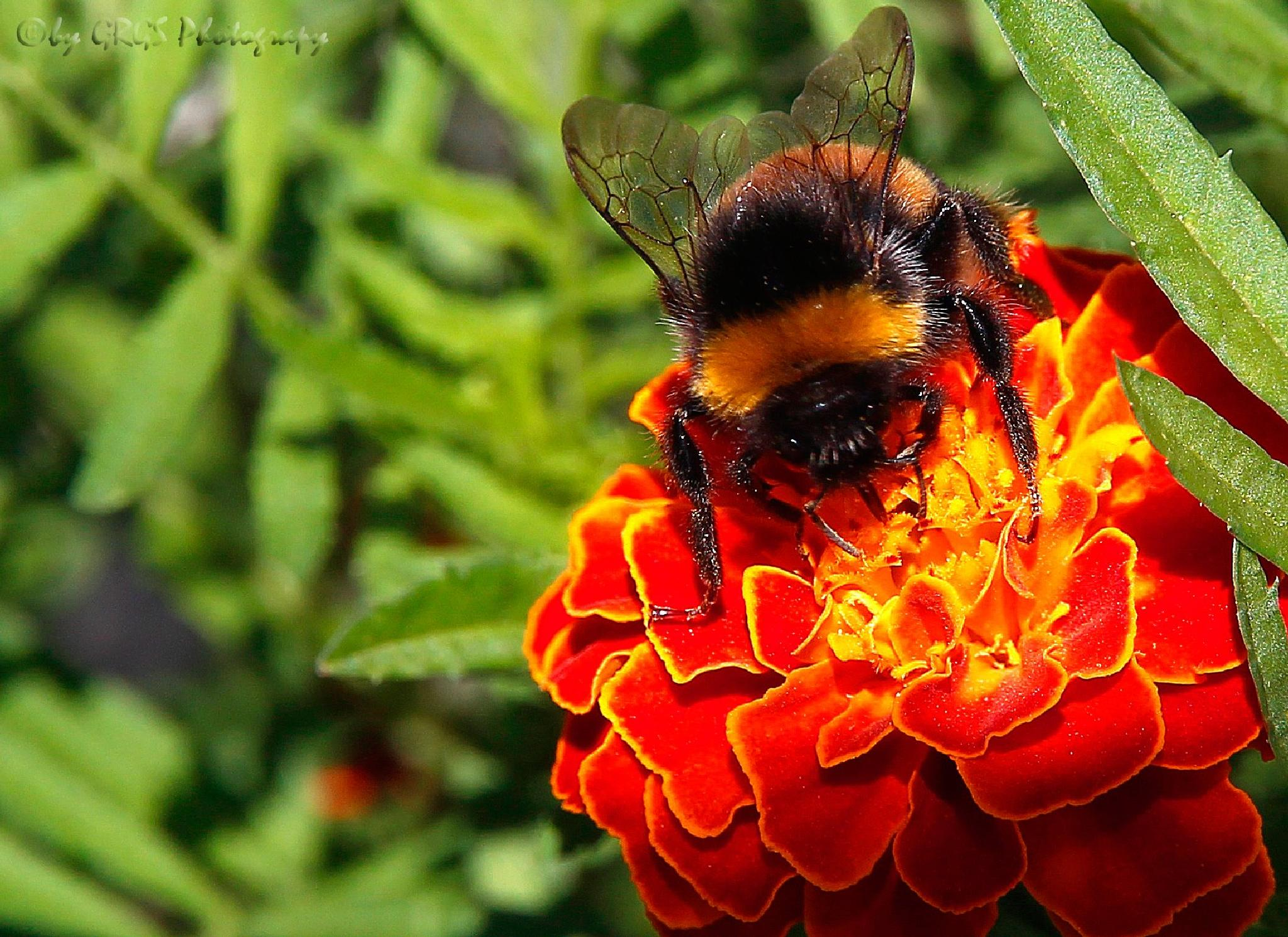 Big Bee by George K. Stamatoukos