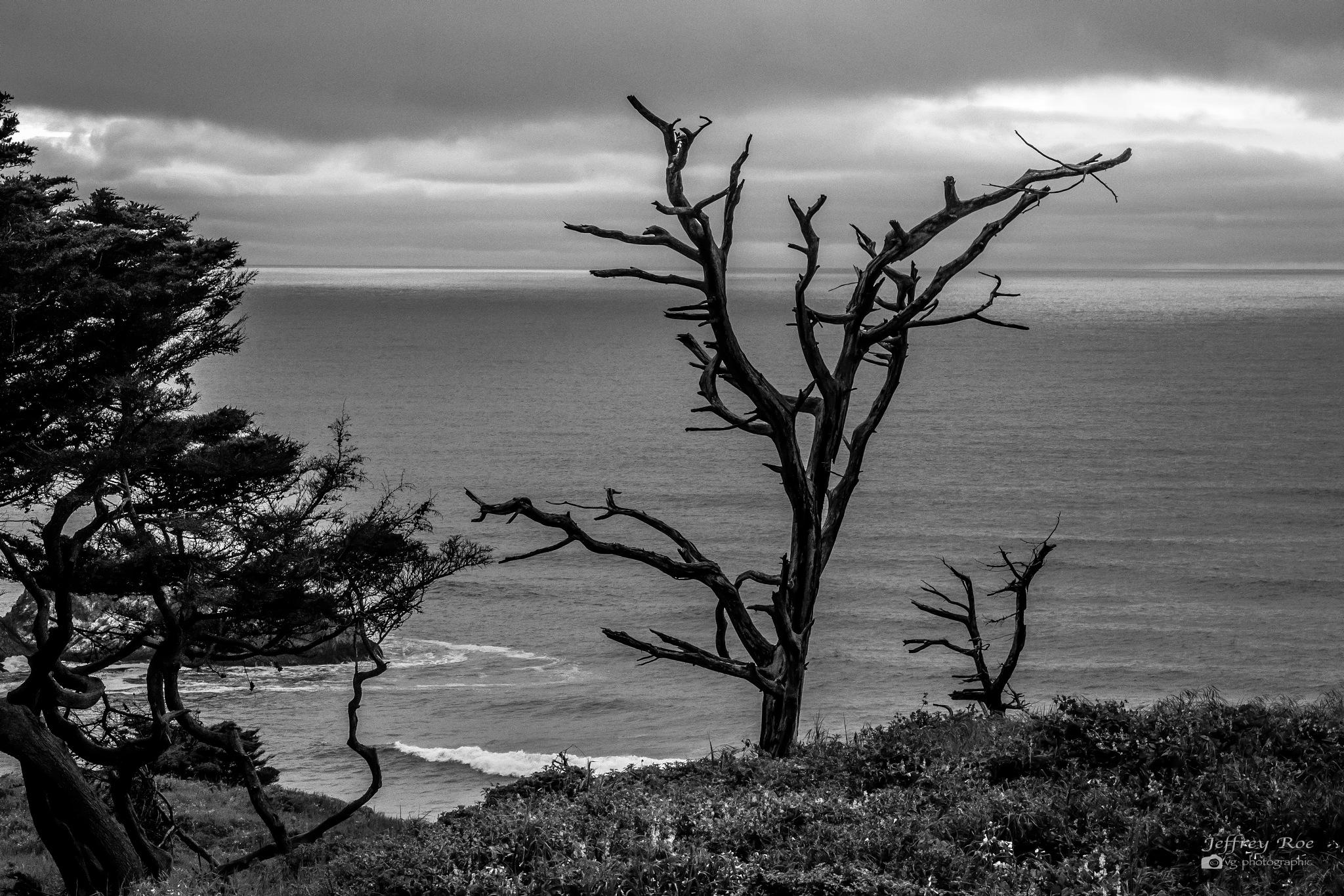 Promontory Tree  by Jeffrey Roe