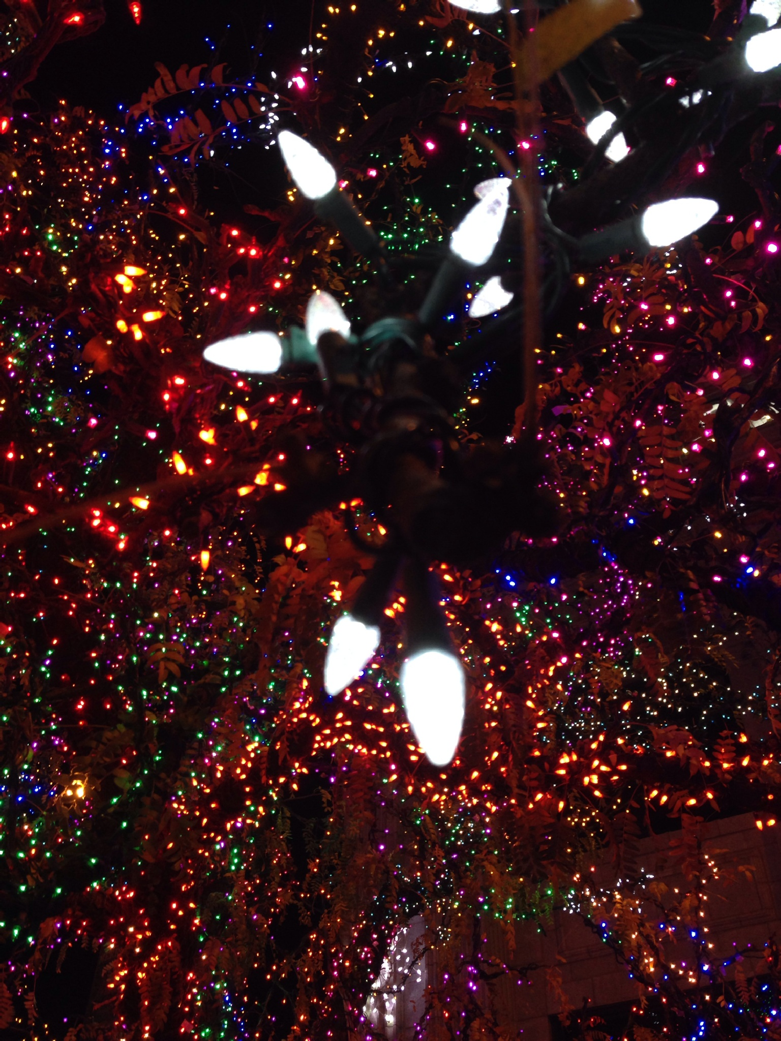 Christmas lights bringing Christmas joy by Rosekirk