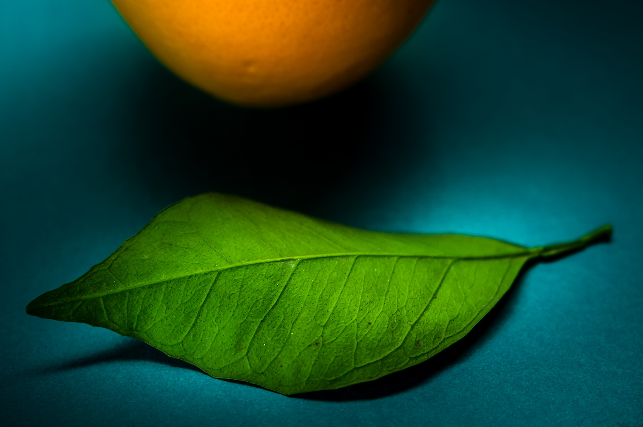 Leaf & Orange 1 by Ashraf Sabbah
