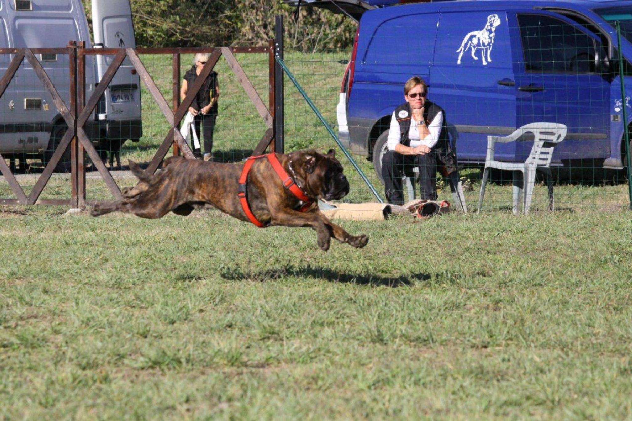 Concours, sport canin by elisaboxer2014