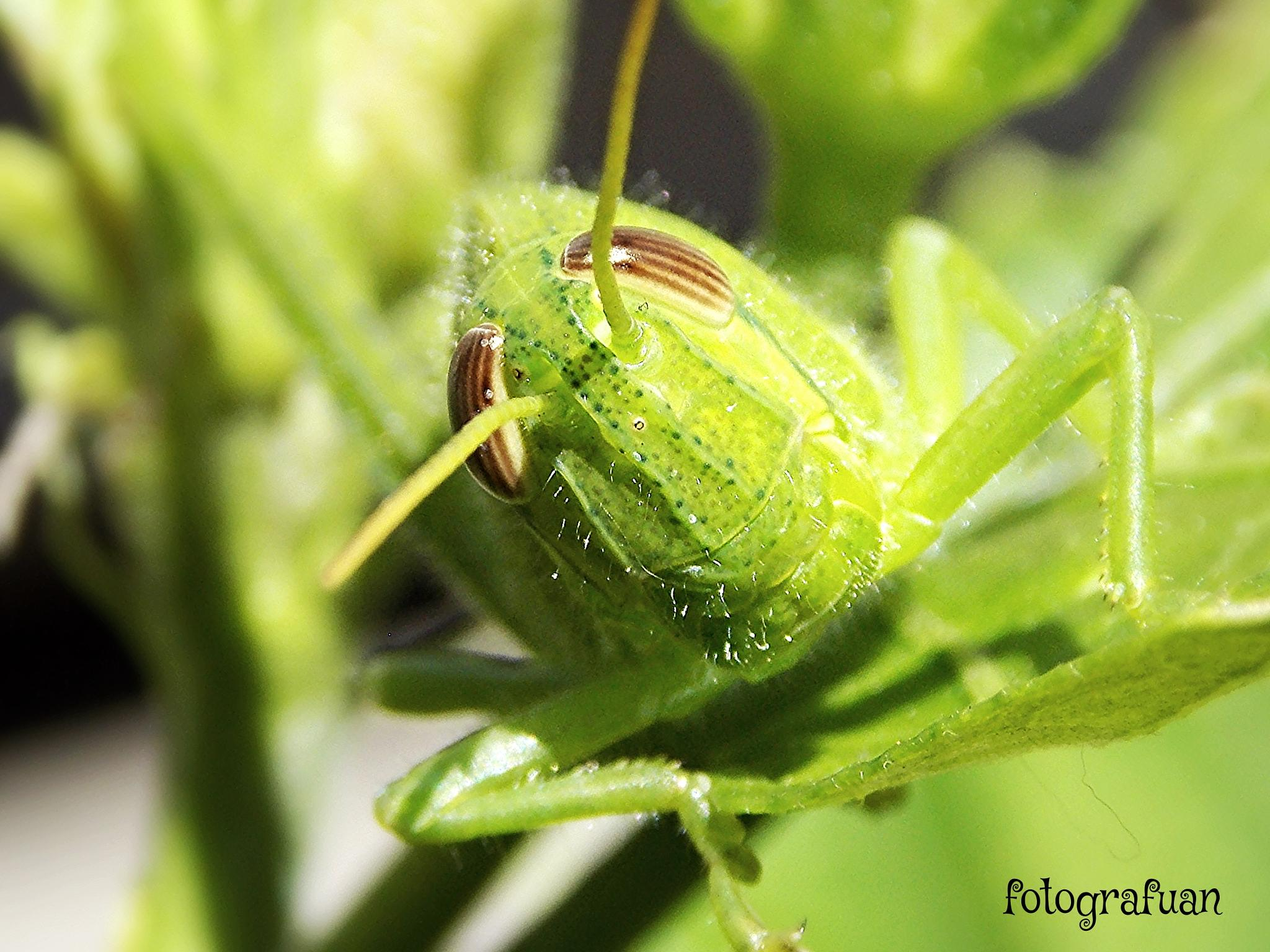 cricket green by Juan Carlos Saldarriaga Pantera