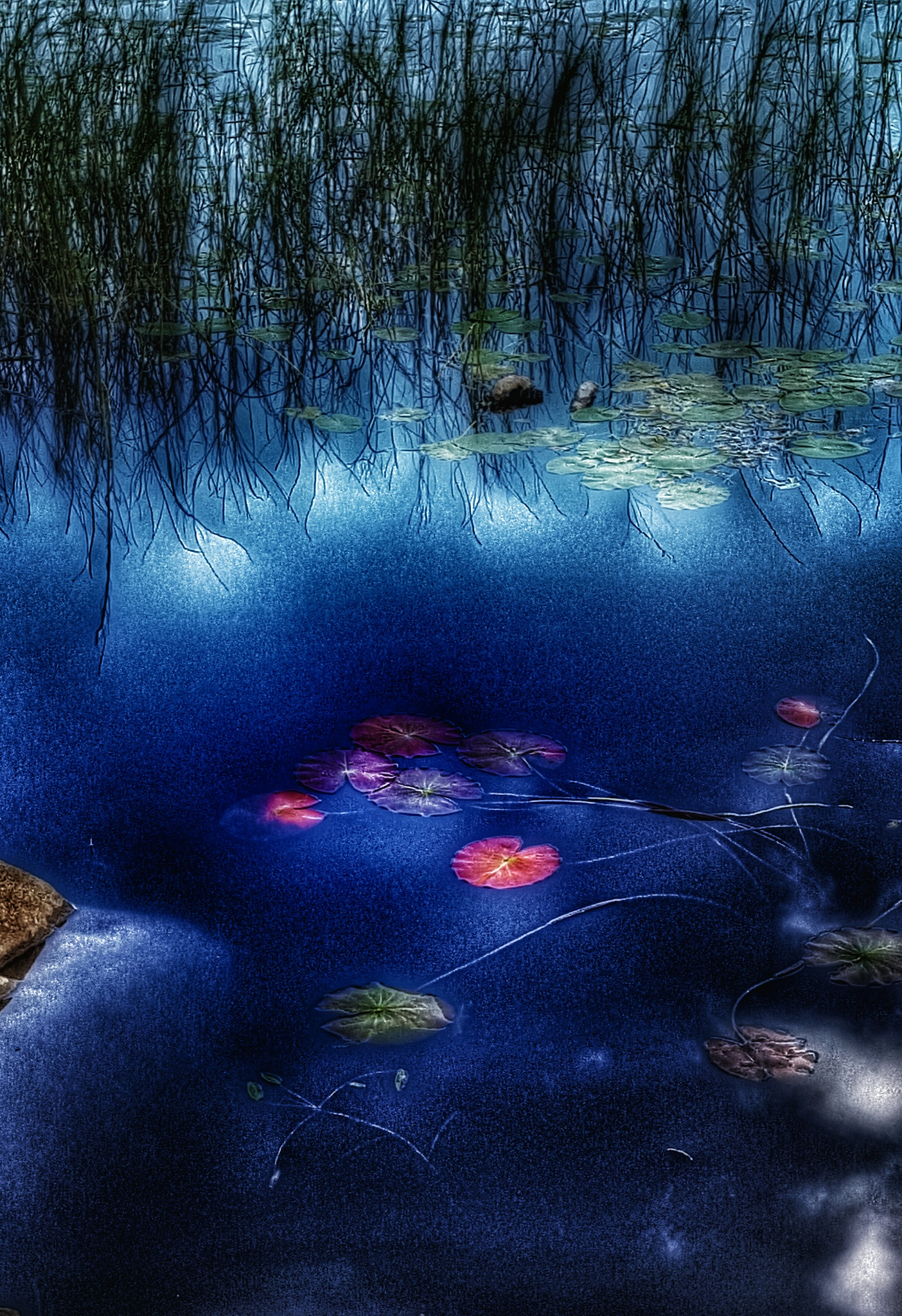 Waterlilies by Anna Lindberg