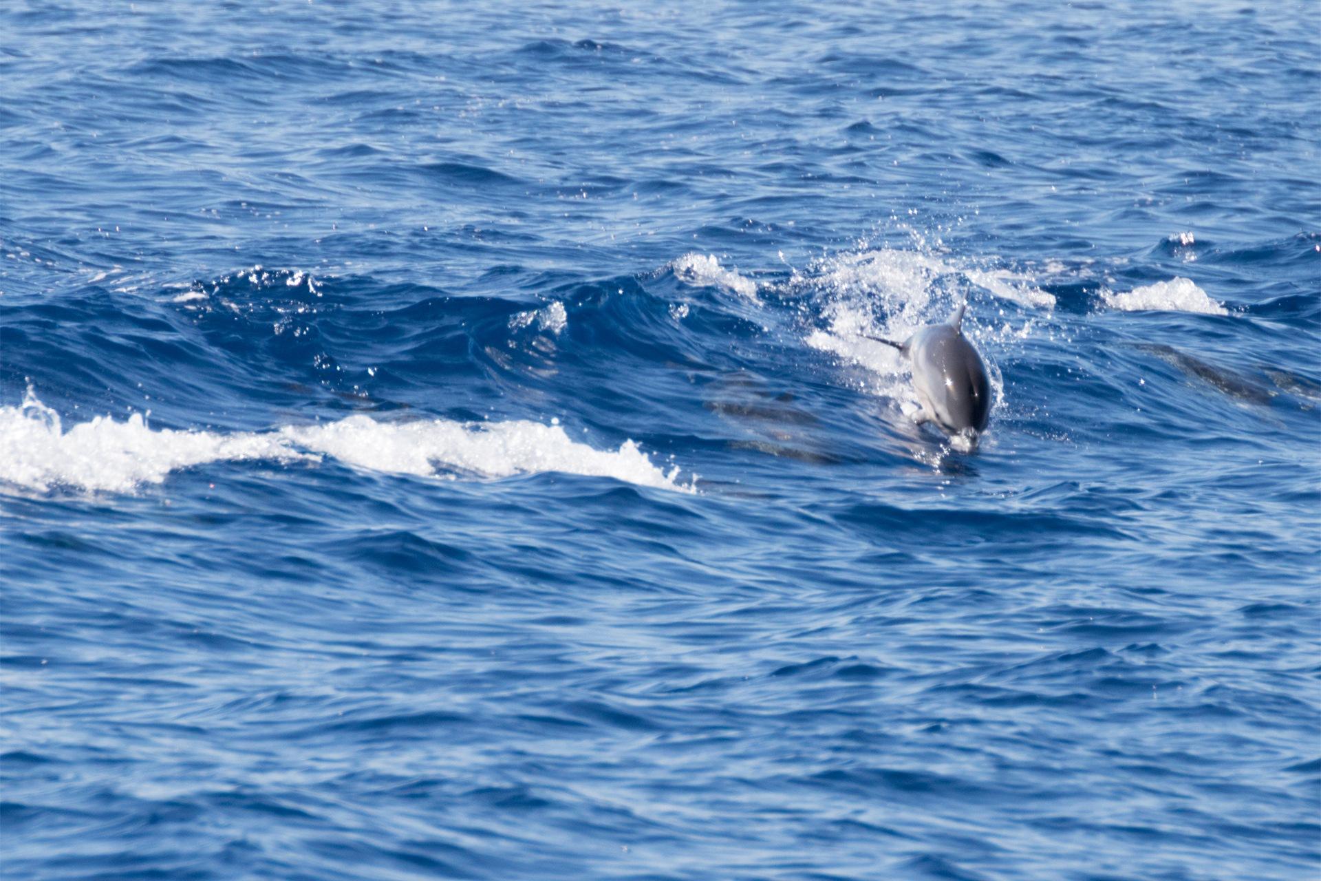 delfini by Fabio C.