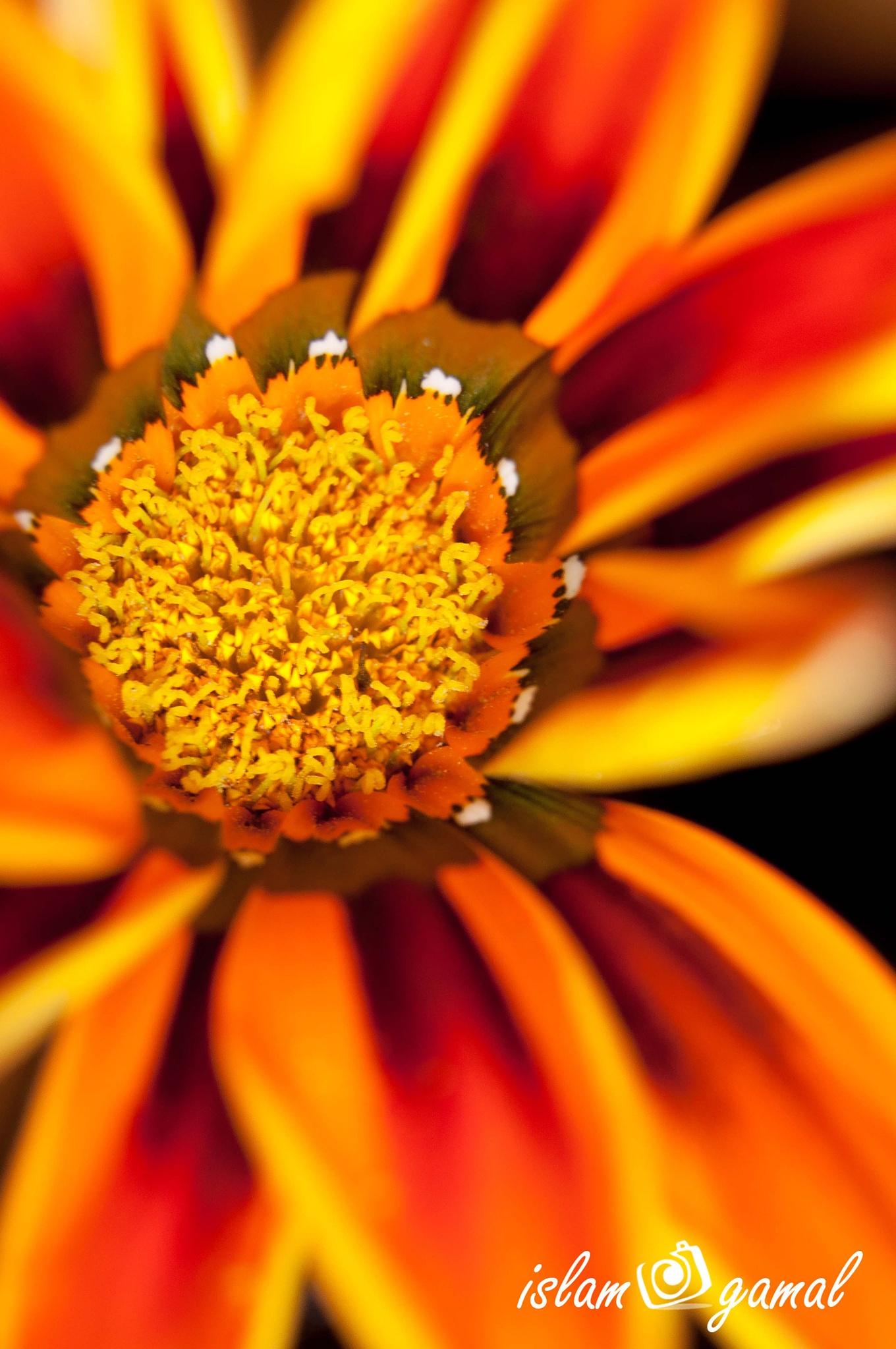 Flower by searock78