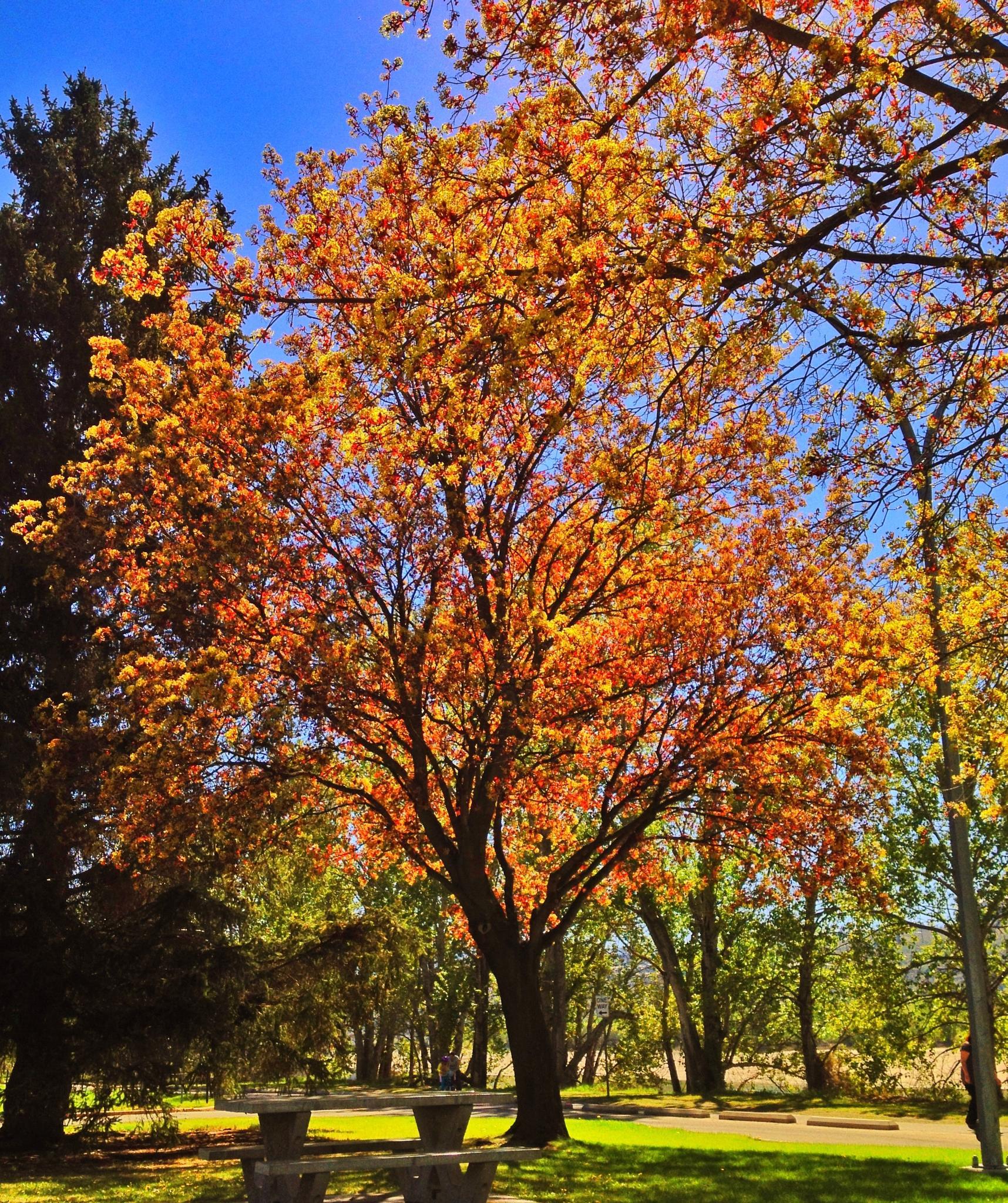 Springtime splendor by Dawn Moniuk