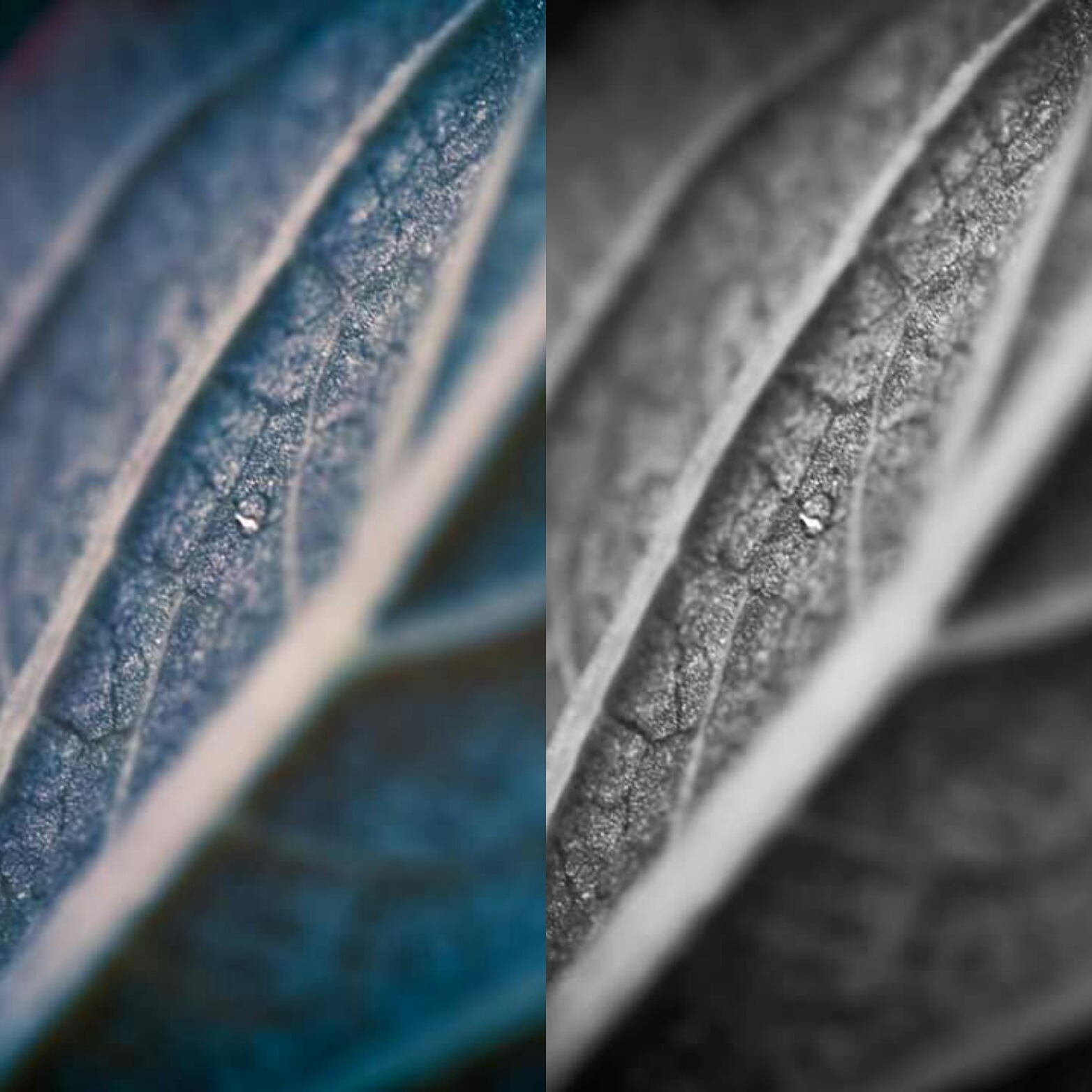 which do you prefer? left or right  by Erin Tilley Photography
