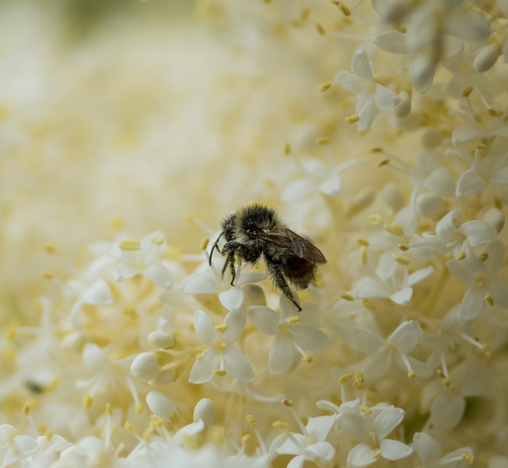 ALL THE BUZZ IS ABOUT ME by DrJohnHodgson