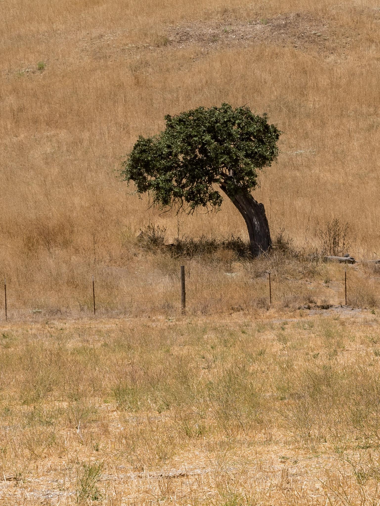 TREE by DrJohnHodgson