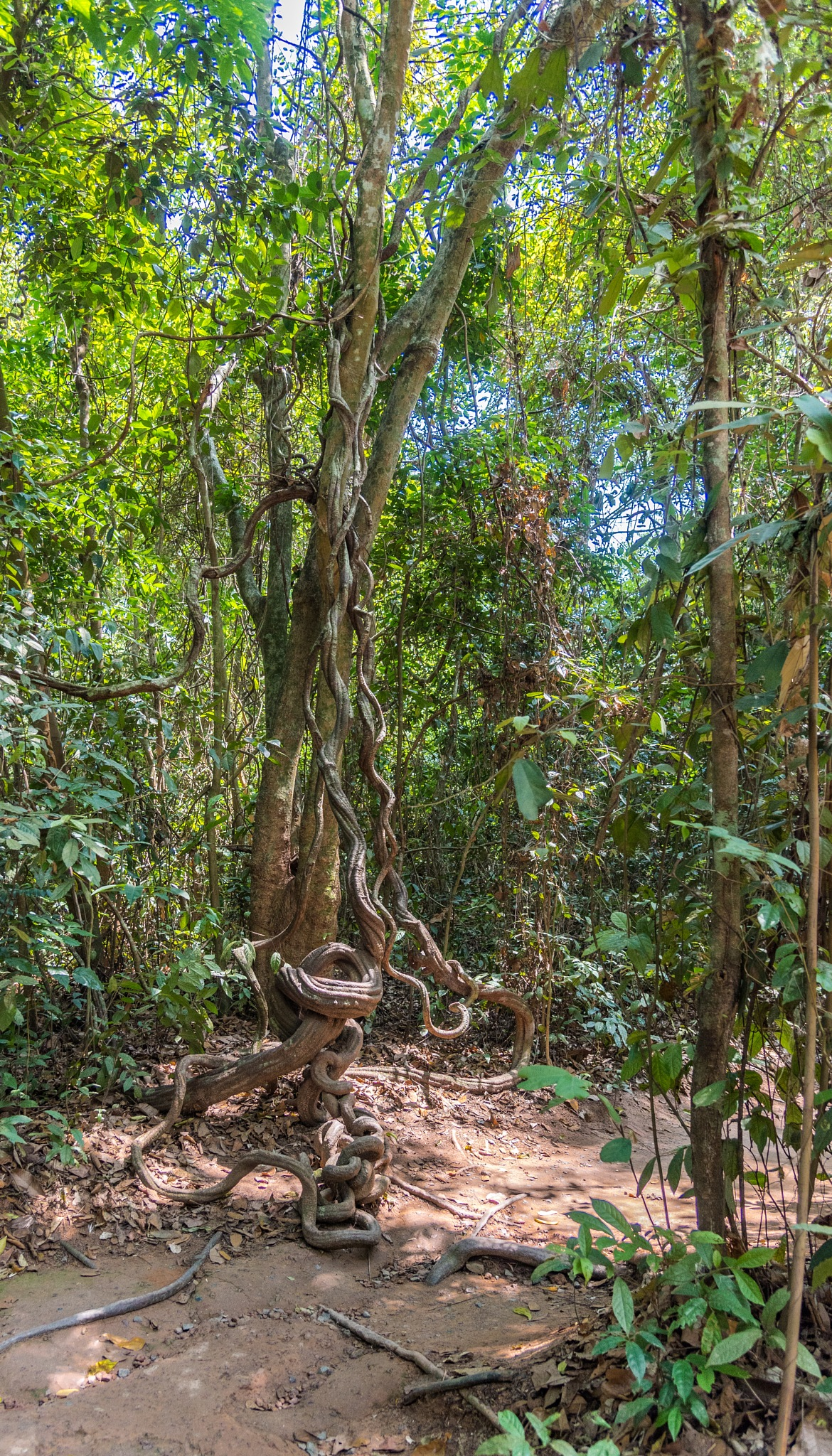 TWISTY TREE by DrJohnHodgson