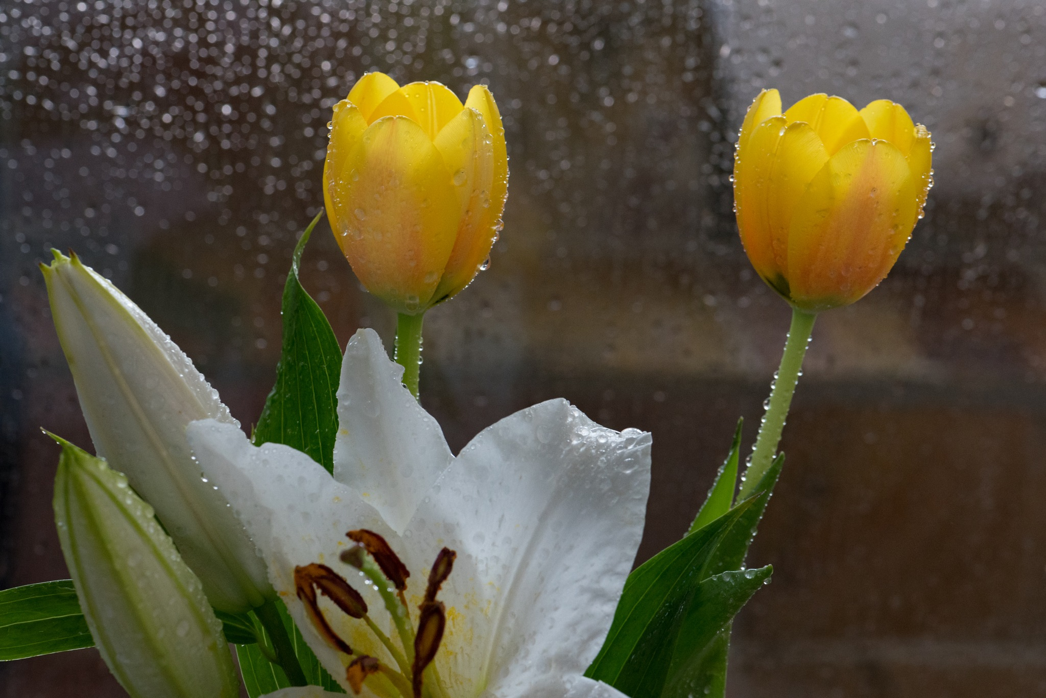 MORE FLOWERS IN THE SHOWER by DrJohnHodgson