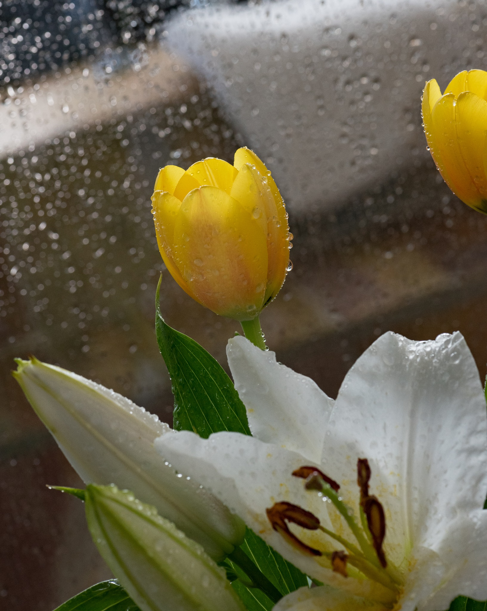 FLOWERS IN THE SHOWER by DrJohnHodgson