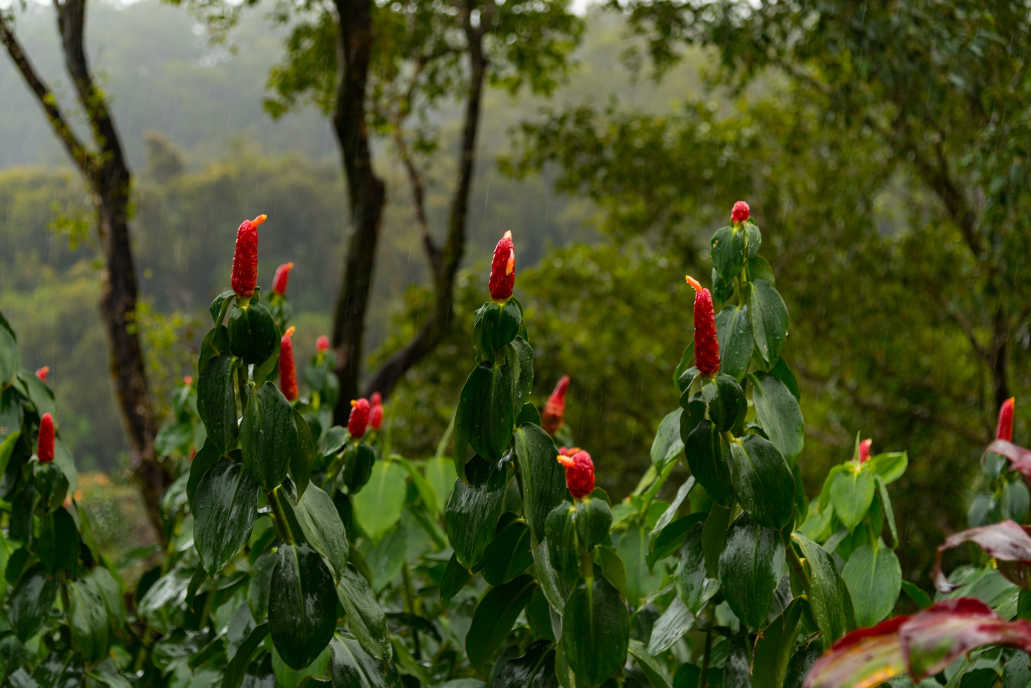 RED FLOWERS IN THE RAIN by DrJohnHodgson