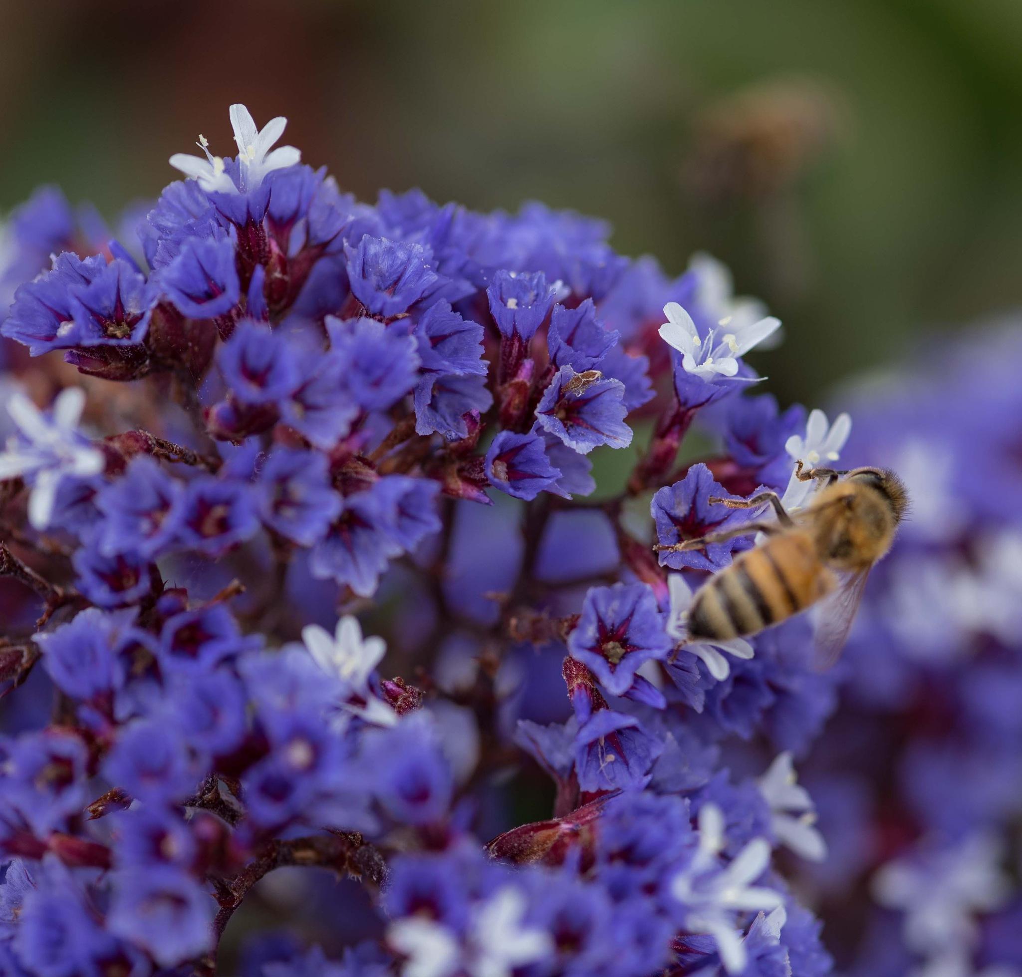 HONEY BEE by DrJohnHodgson