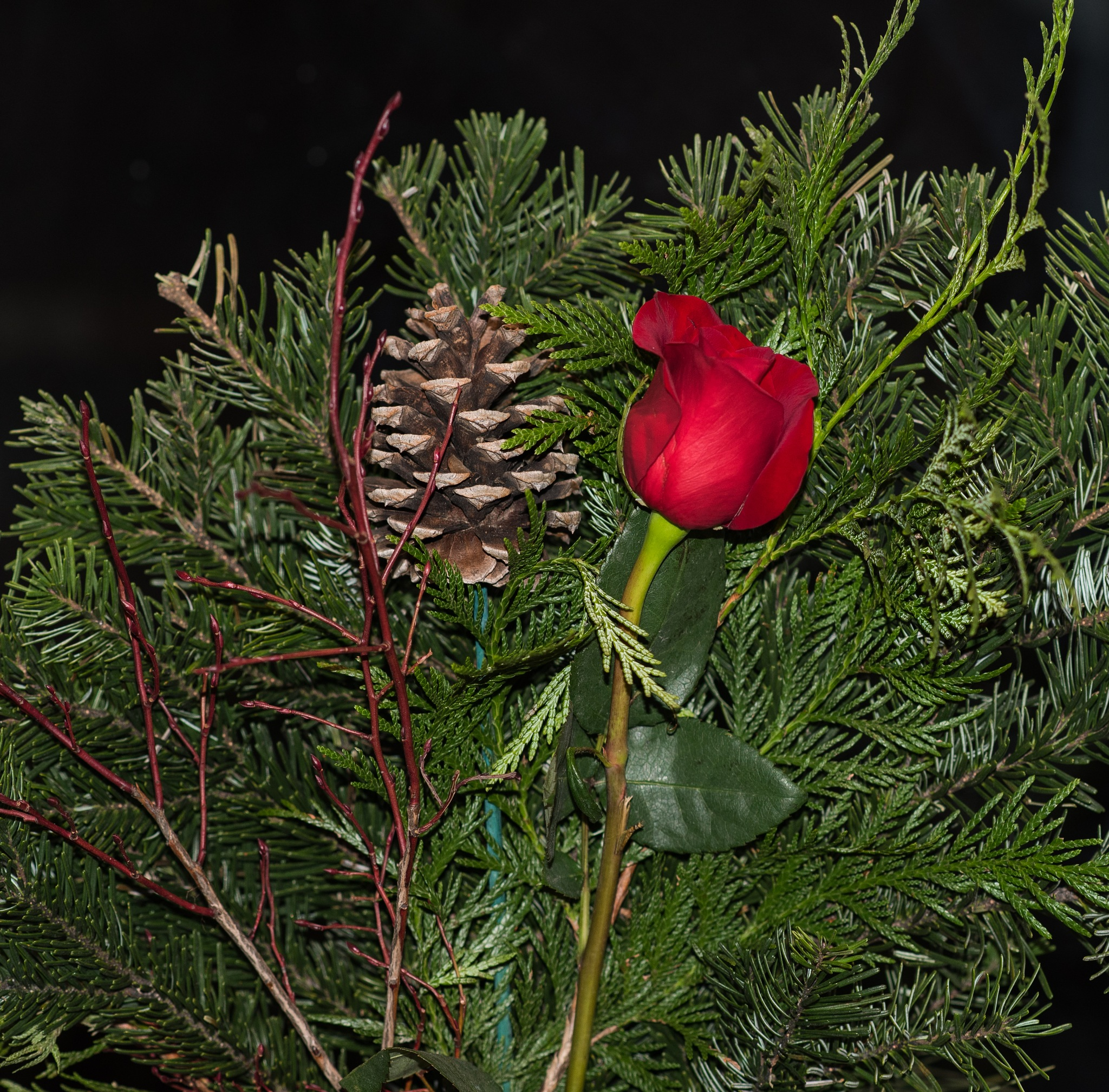 STILL LIFE: ROSE AND PINE CONE by DrJohnHodgson