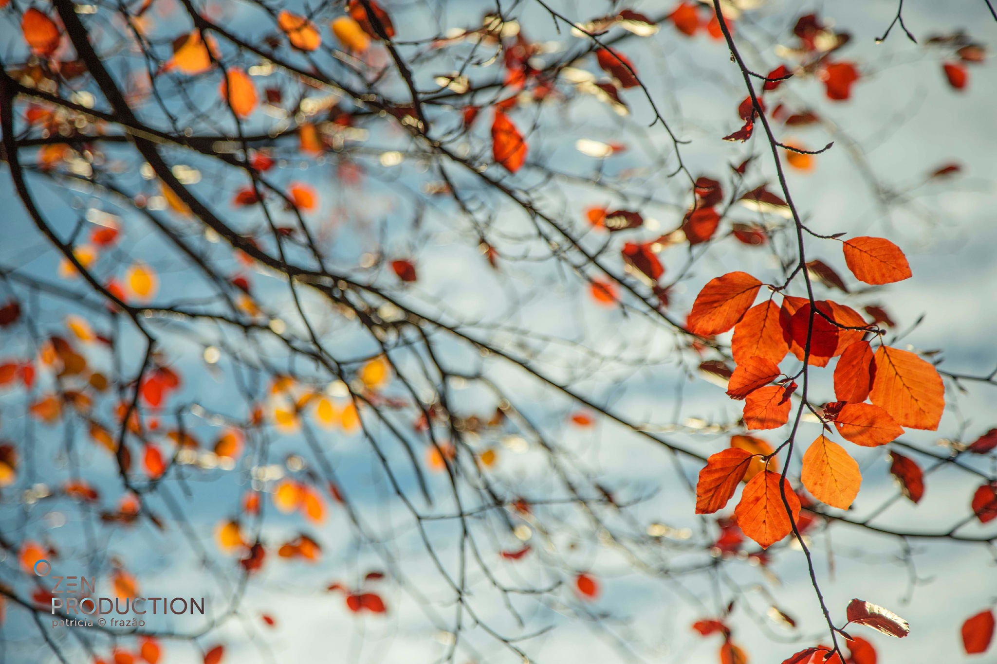 The end of Fall by Patricia Frazão