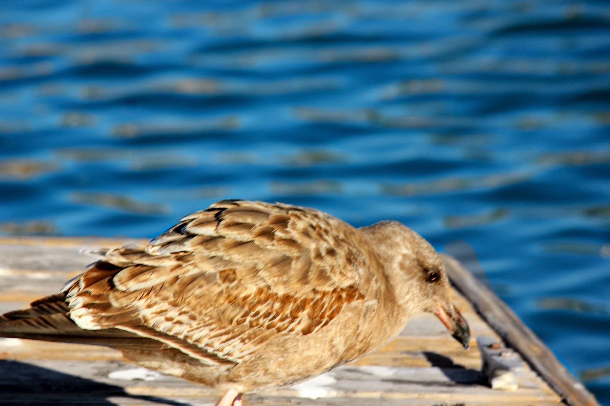 Sitting on the dock of a bay ... by Tiffanie Faith Chezum